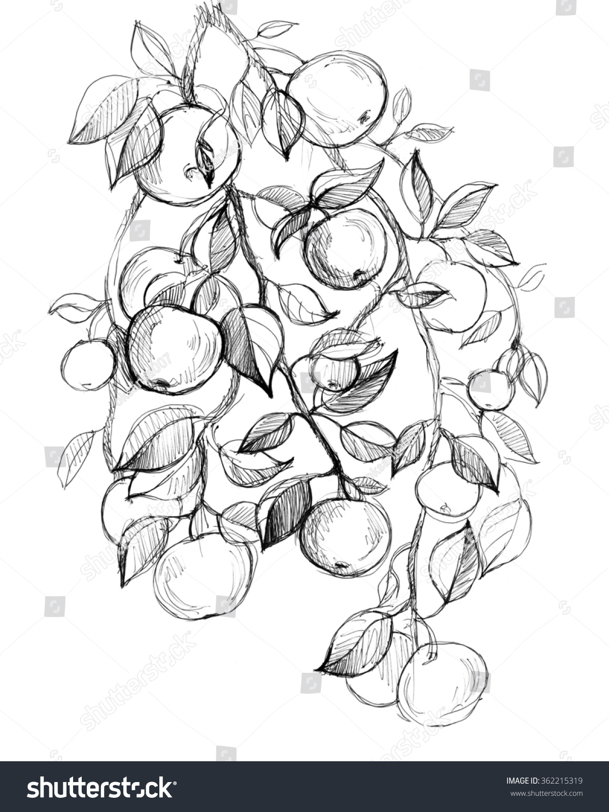 Coloring book page apple tree - Apple Tree Fruits Leaves Hand Drawn Amazing Artwork Love Bohemia Concept For Textile