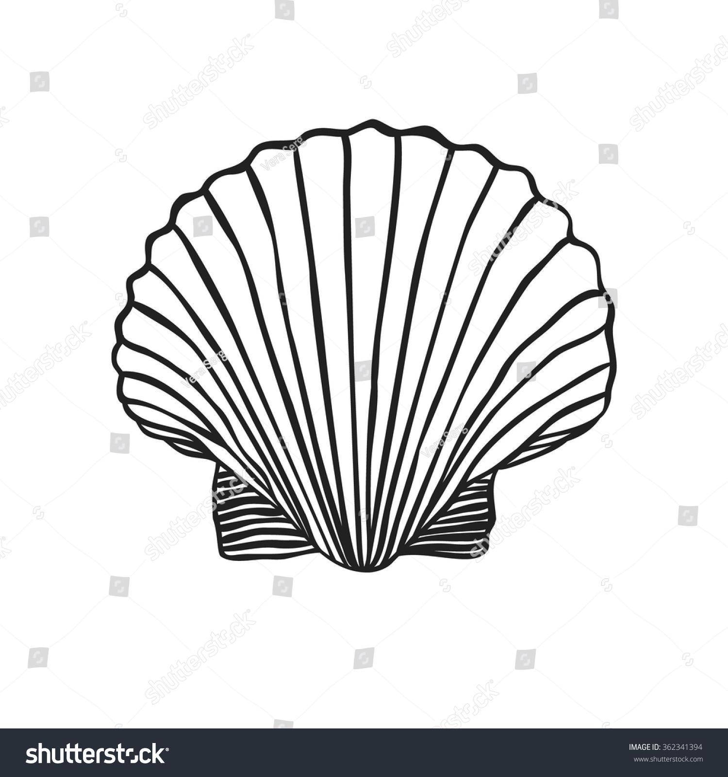 Contour Line Drawing Shell : Hand drawn boho illustration shells vector stock