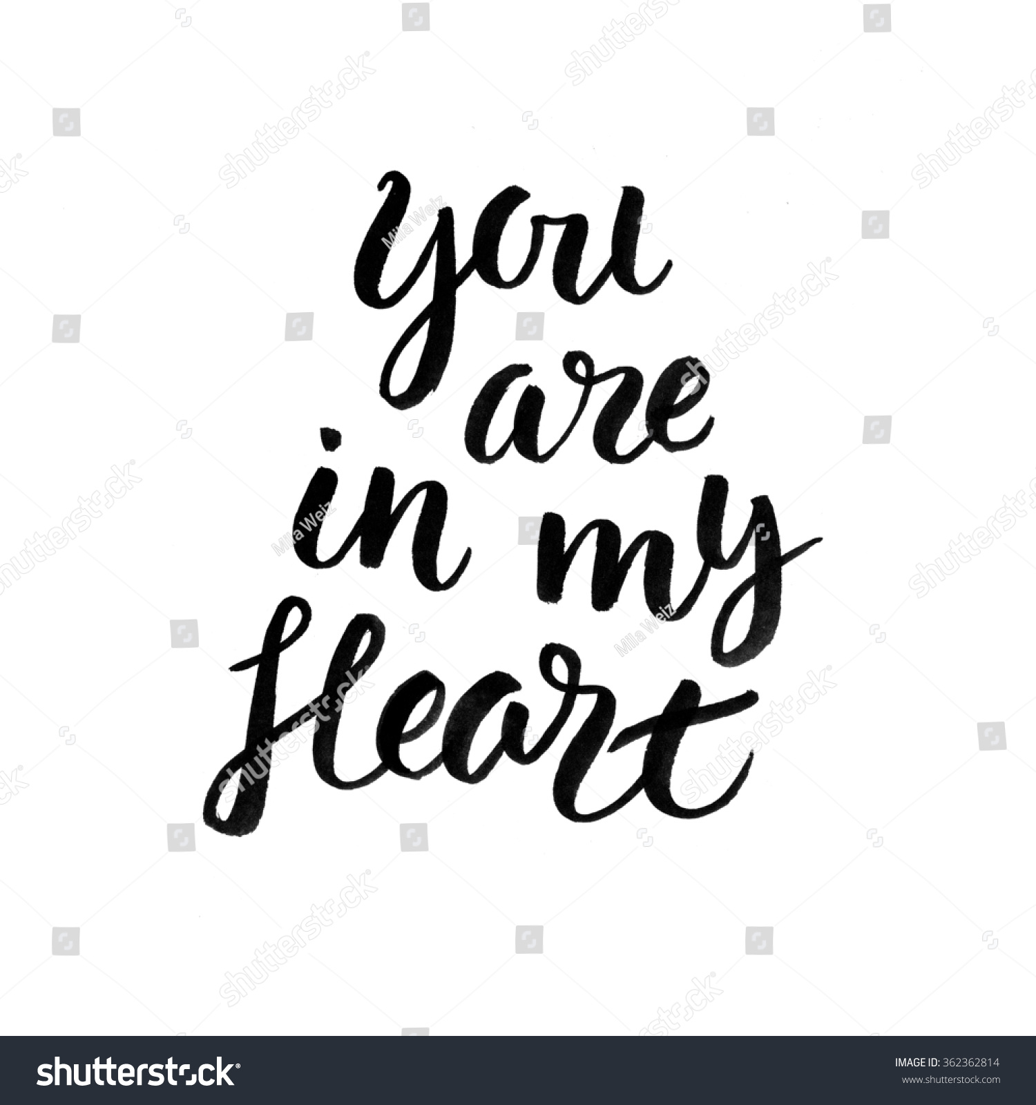 You are in my heart modern calligraphy hand drawn ink illustration shutterstock