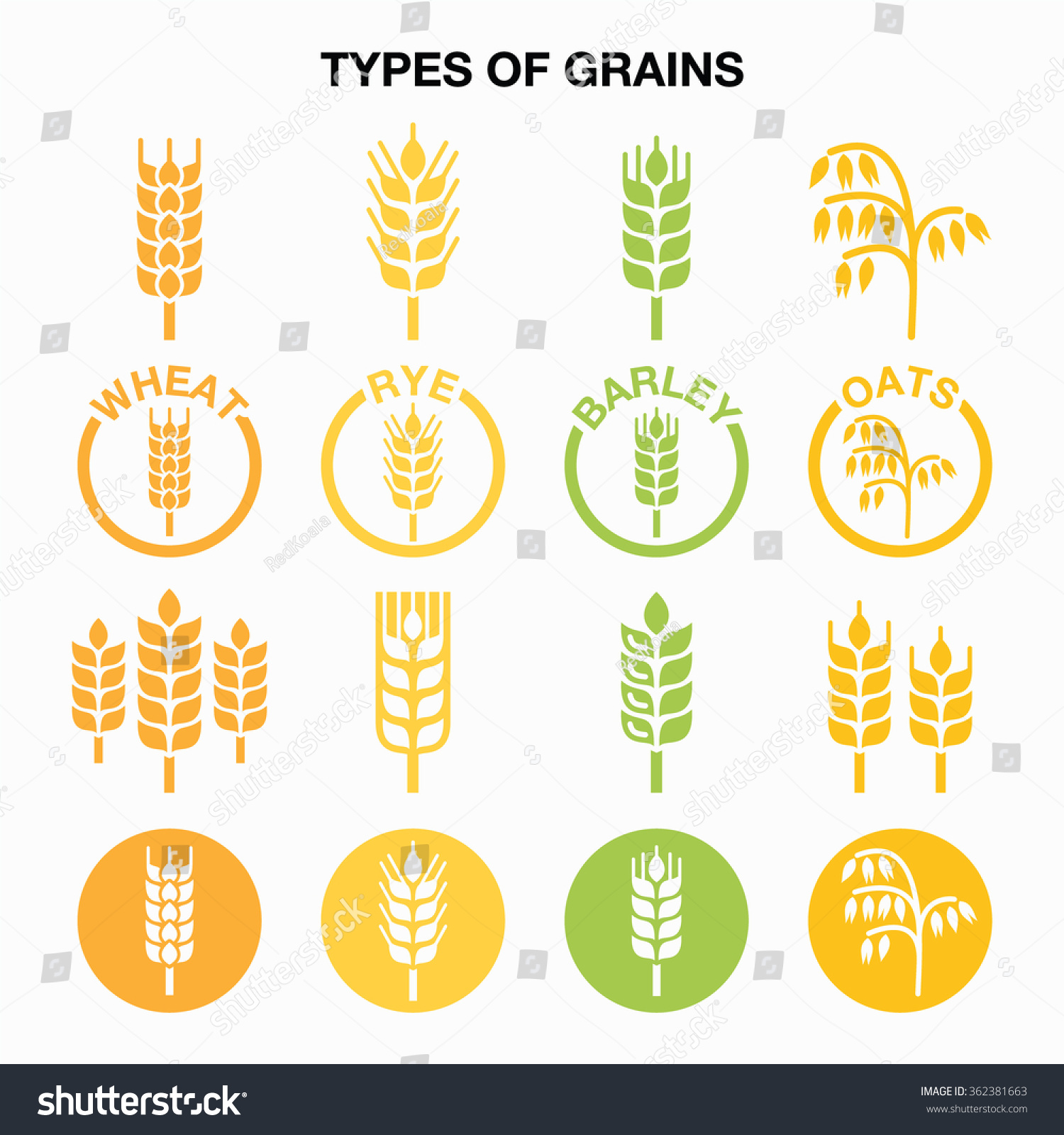 Types Grains Cereals Icons Wheat Rye Stock Vector