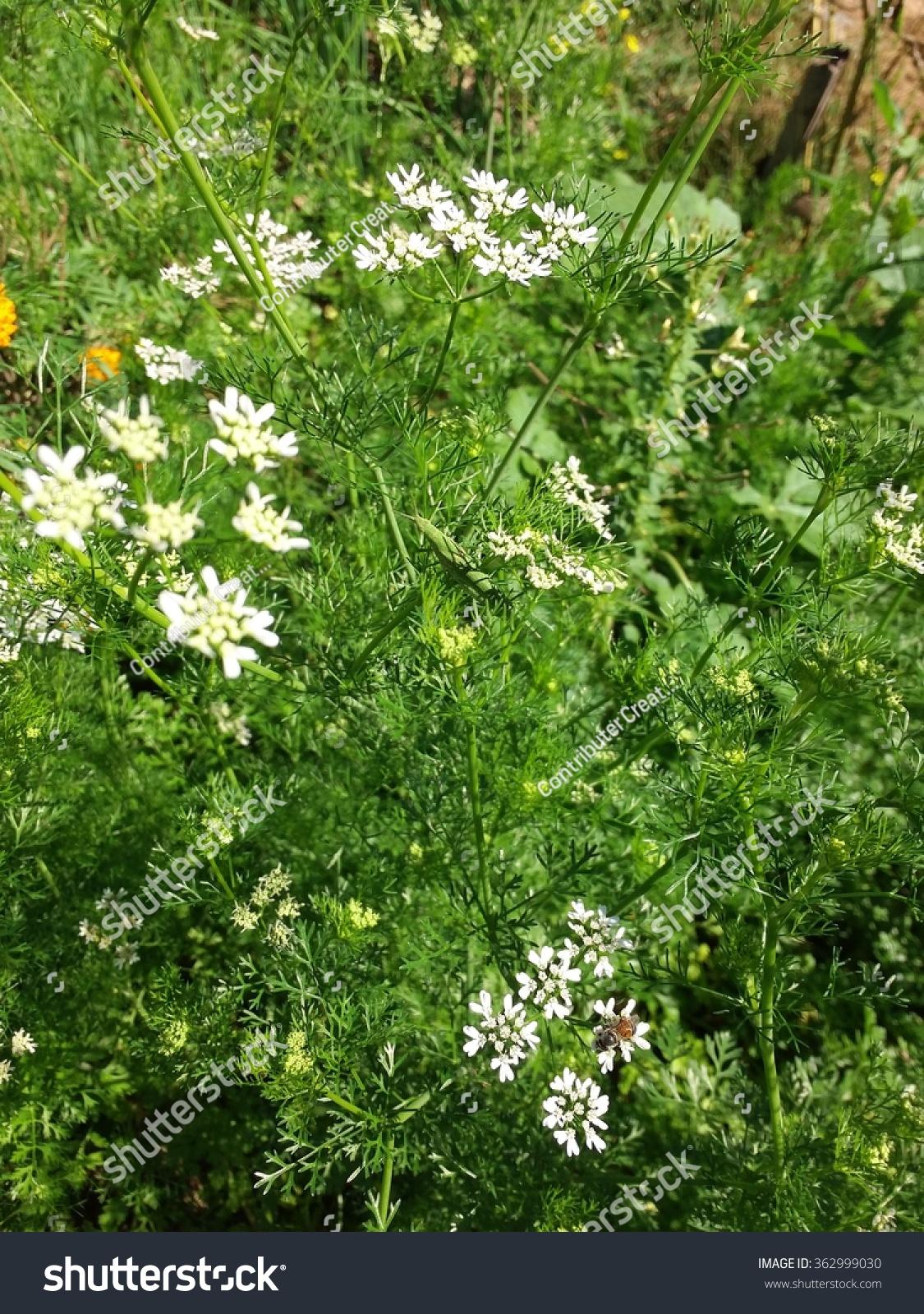 White Flower Vegetable On Green Leaf Stock Photo Edit Now