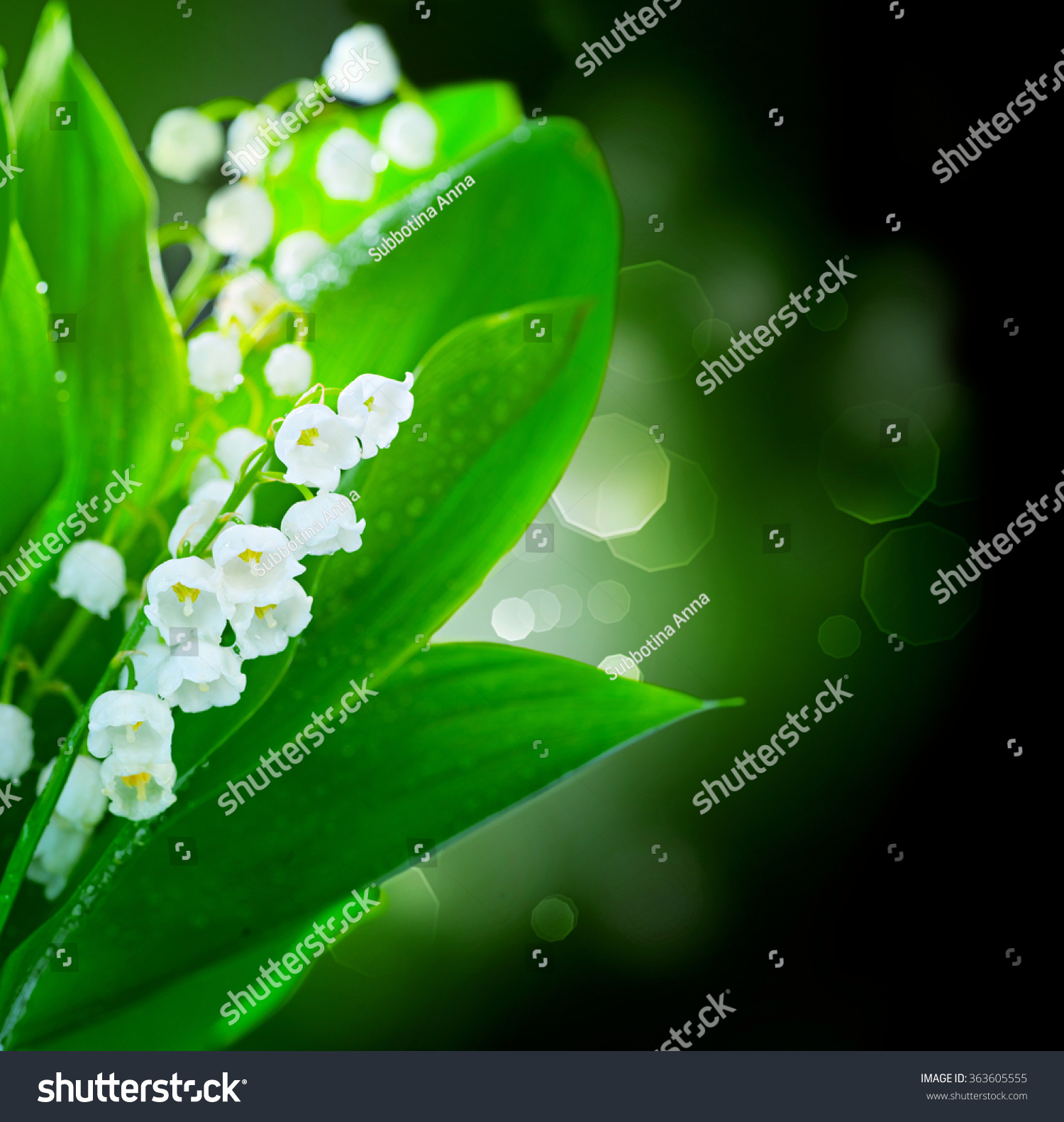 Lilyofthevalley Flowers Border Design Bunch White Stock Photo Edit