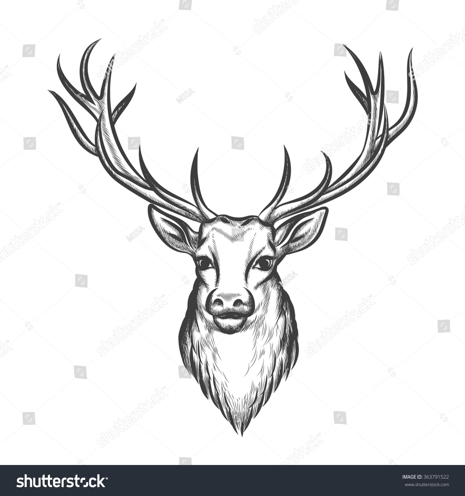 Reindeer Face Line Drawing : Hand drawn deer head wild animal stock vector