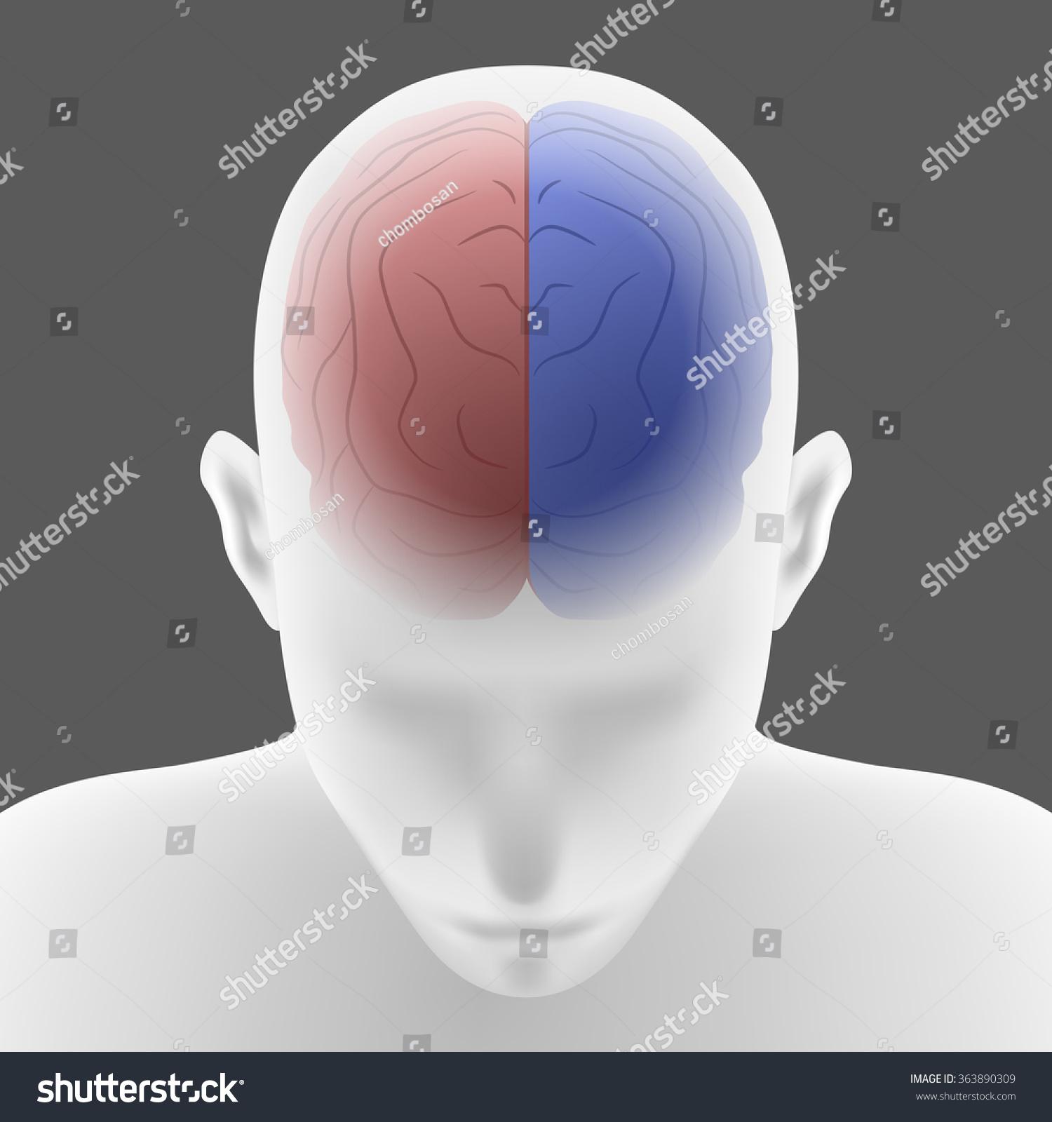 Right Brain Left Brain Human Head Stock Vector 363890309 ...