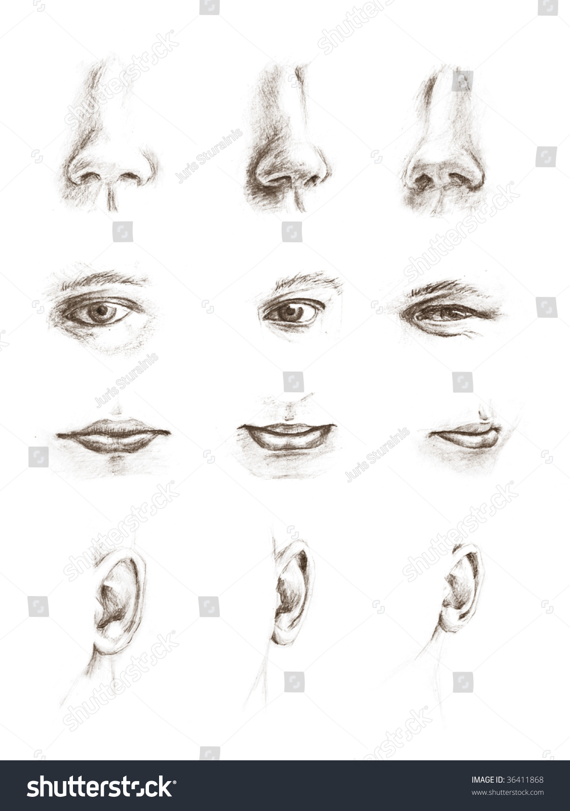 Hand Drawn Pencil Sketches Of Eyes, Ears, Lips And Noses