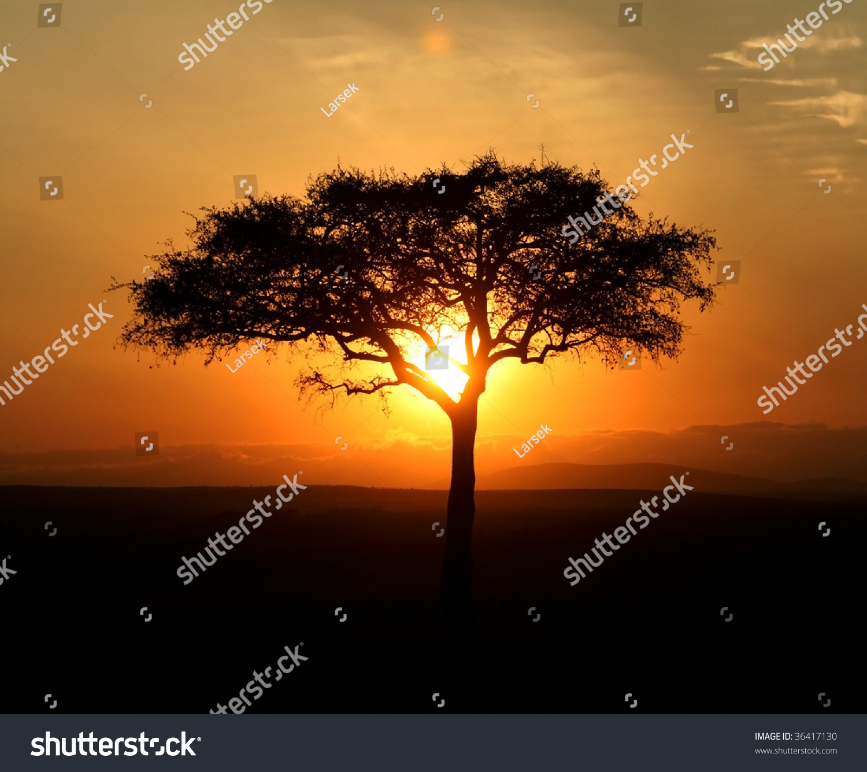 Single Acacia Tree at Sunrise, Masai Mara, Kenya загрузить