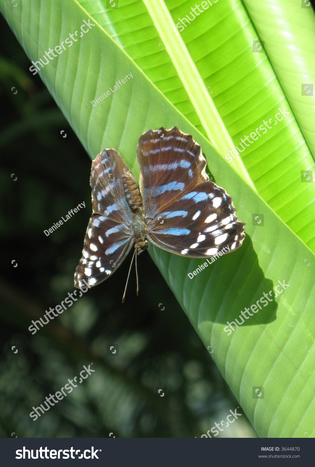 butterfly butterfly conservatory niagara falls stock. Black Bedroom Furniture Sets. Home Design Ideas
