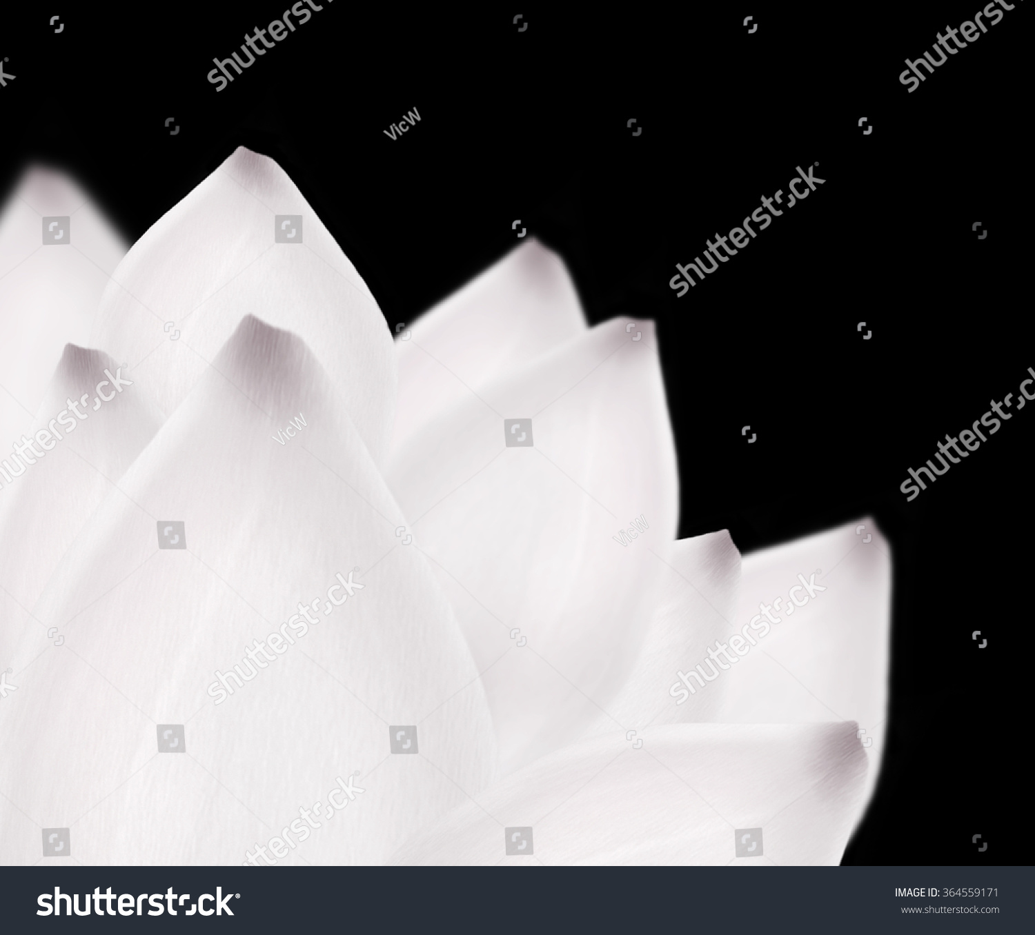 White Lotus Background Beautiful Snow White Stock Illustration