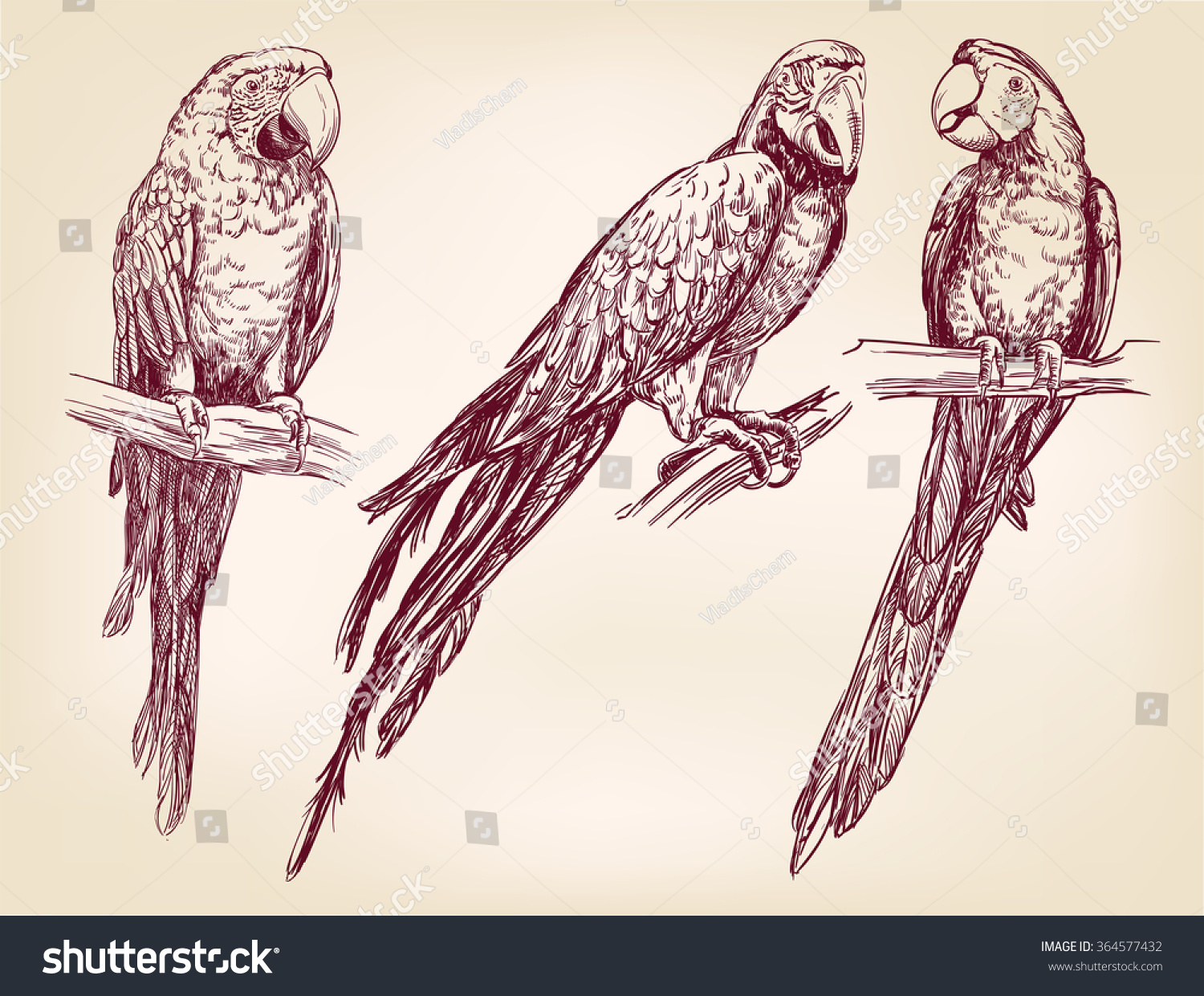 parrot set isolated hand drawn vector stock vector 364577432