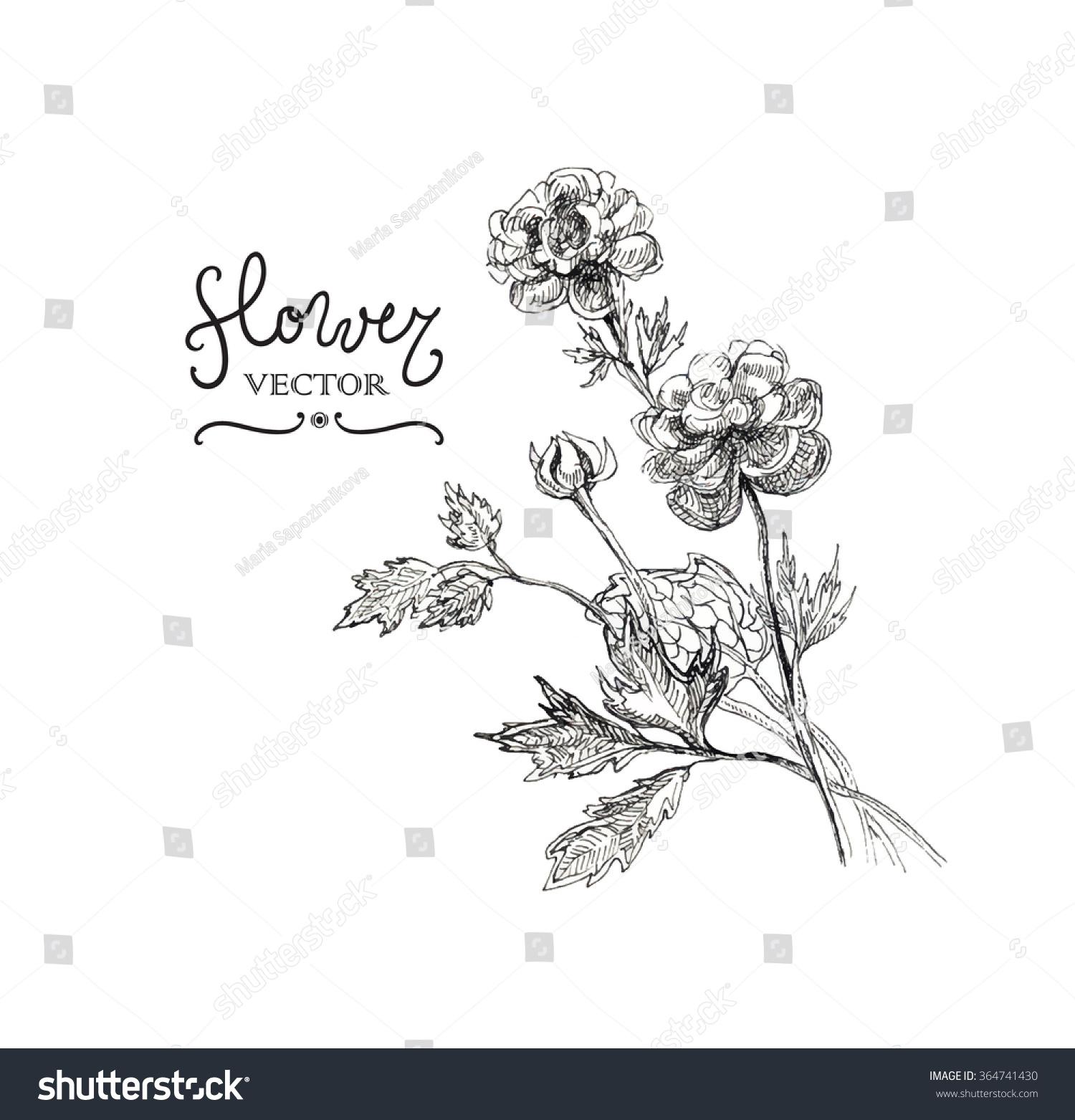 Botany Vintage Flowers Black White Illustration Stock Vector
