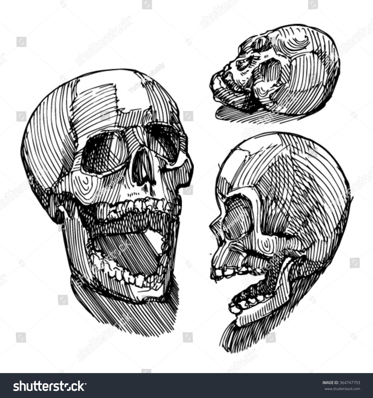 Sketch Skull Sketch Anatomical Skull Academic Stock Vector 364747793 ...