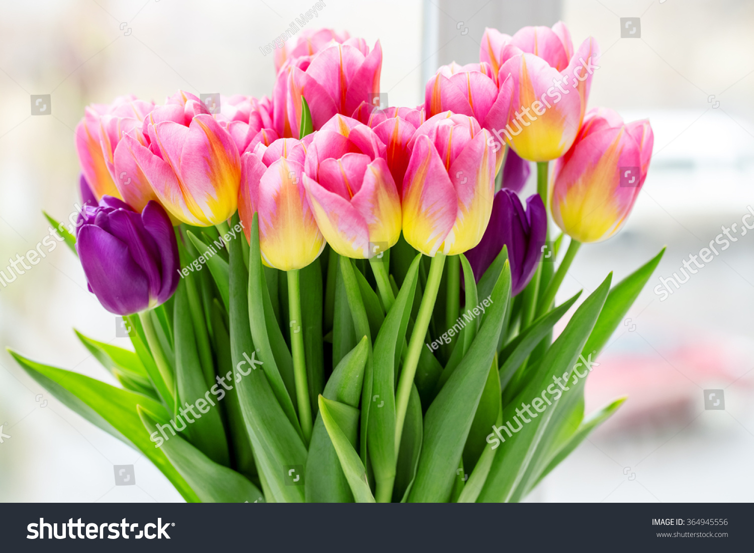 Beautiful pink purple tulips bouquet flowers stock photo 364945556 beautiful pink and purple tulips a bouquet of flowers for march 8 or valentines dhlflorist Image collections