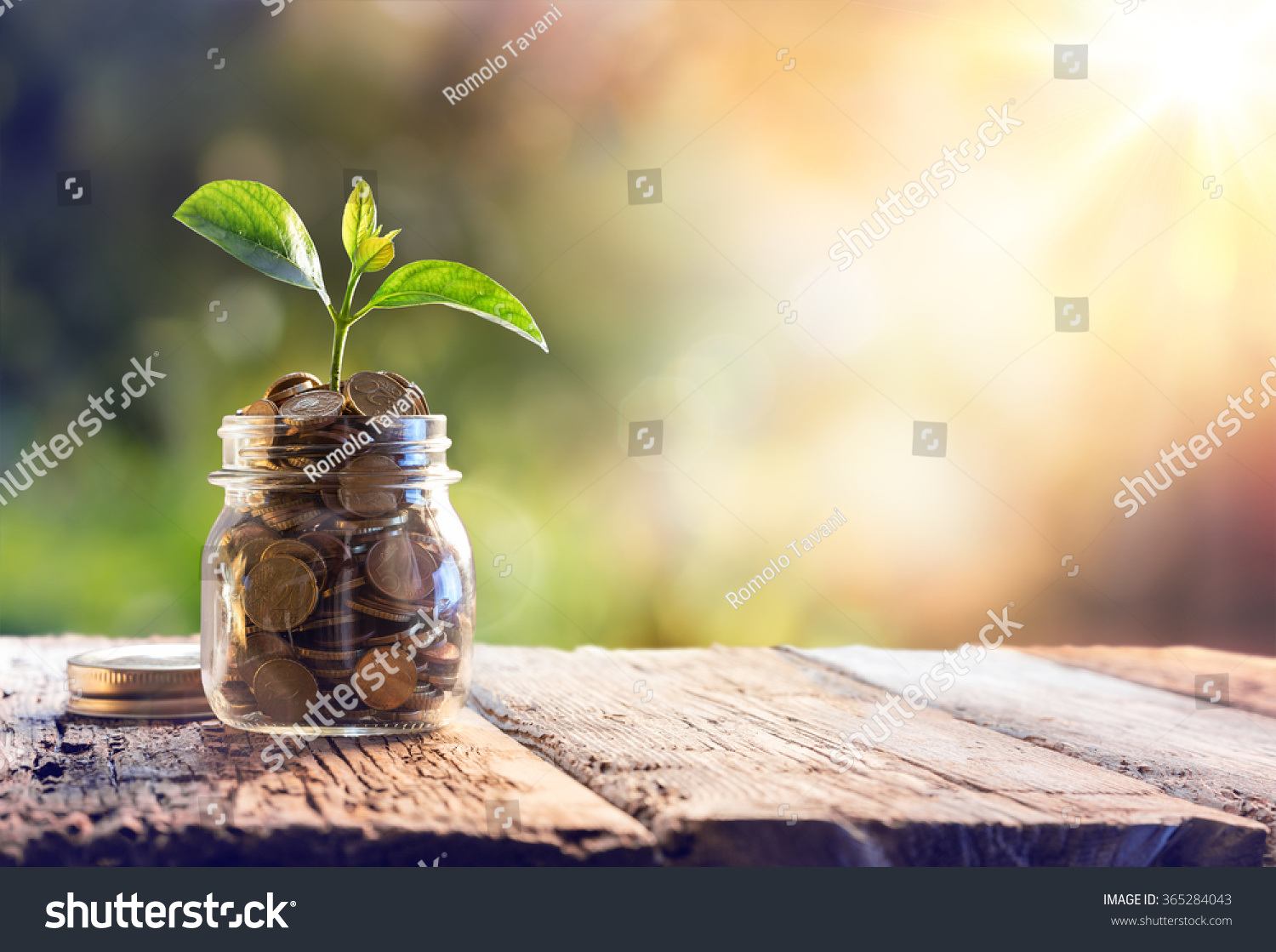 Plant Growing In Savings Coins - Investment And Interest Concept  #365284043