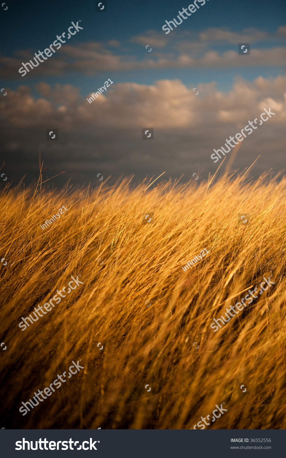Tall Spikes Of Grass wallpaper
