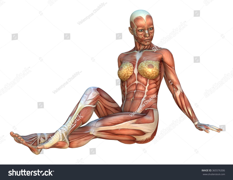 3 D Digital Render Female Figure Muscle Stock Illustration 365576306 ...