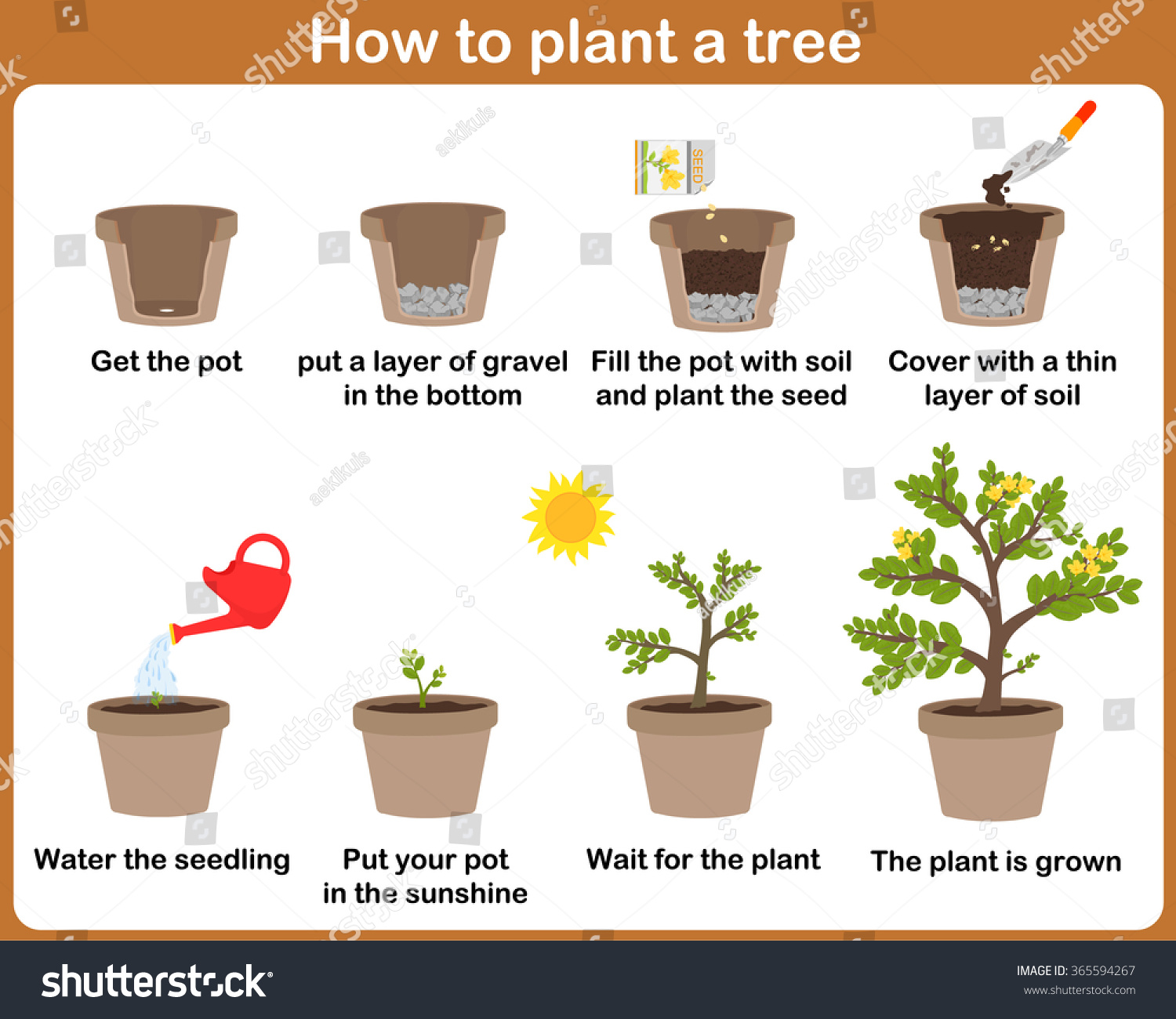 How plant tree easy step by stock vector 365594267 shutterstock - Fir tree planting instructions a vigorous garden ...