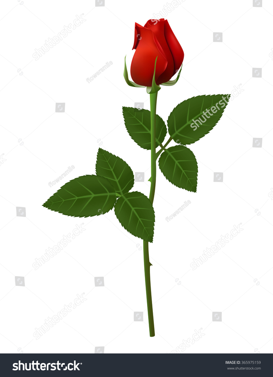 Single red rose flower vector illustration, beautiful red Valentine ...