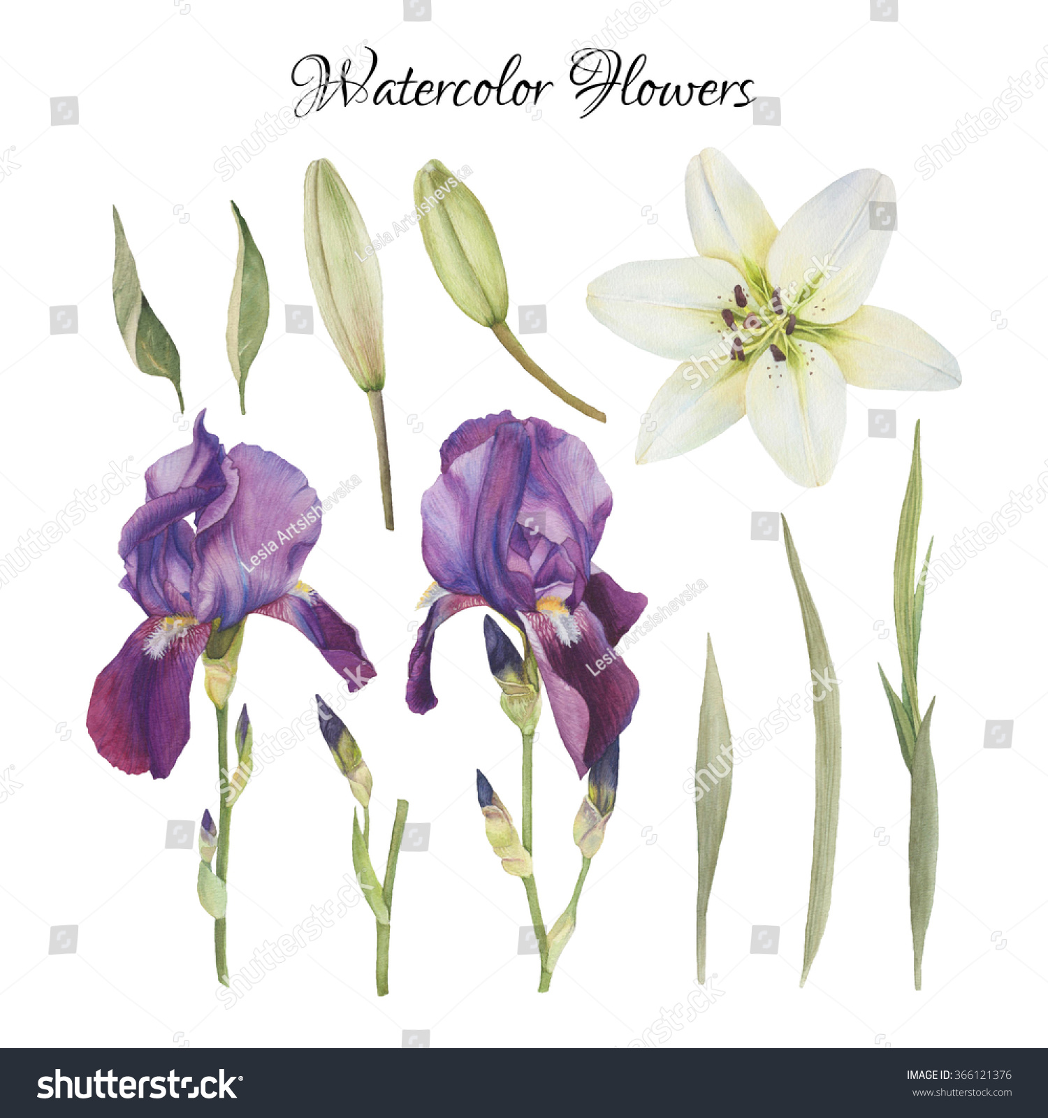 Flowers Set Of Hand Drawn Watercolor Irises Lily And Leaves Ez Canvas