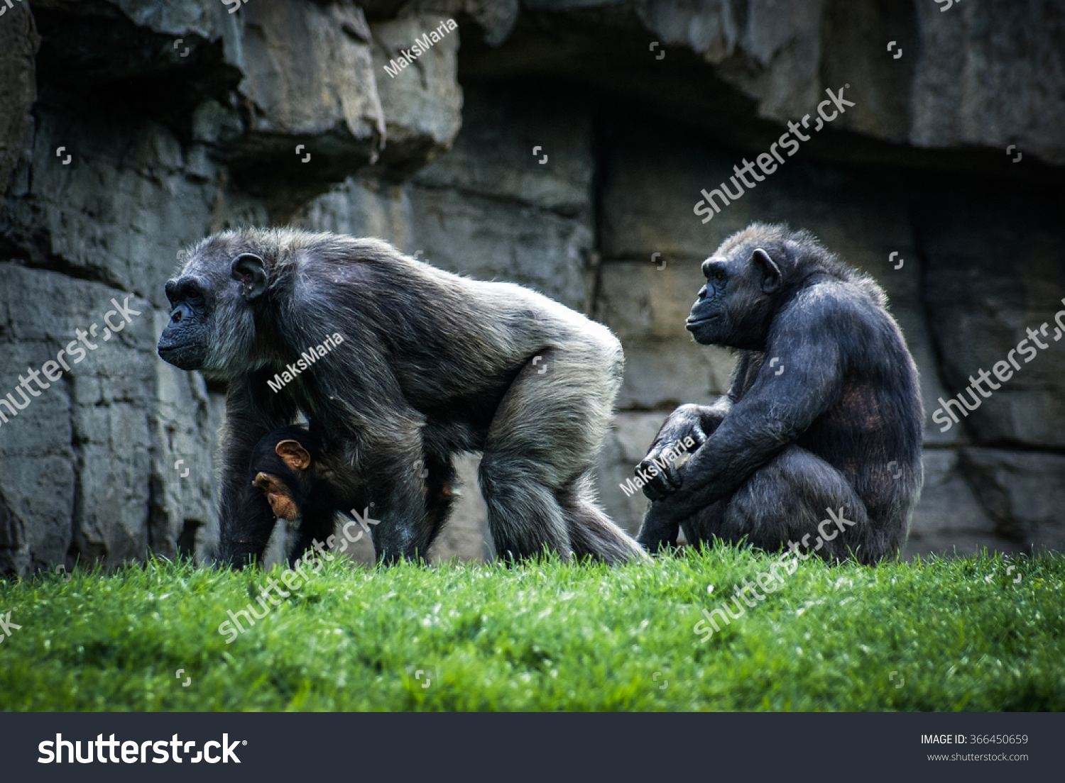 Monkey family in a zoo in Valencia Spain