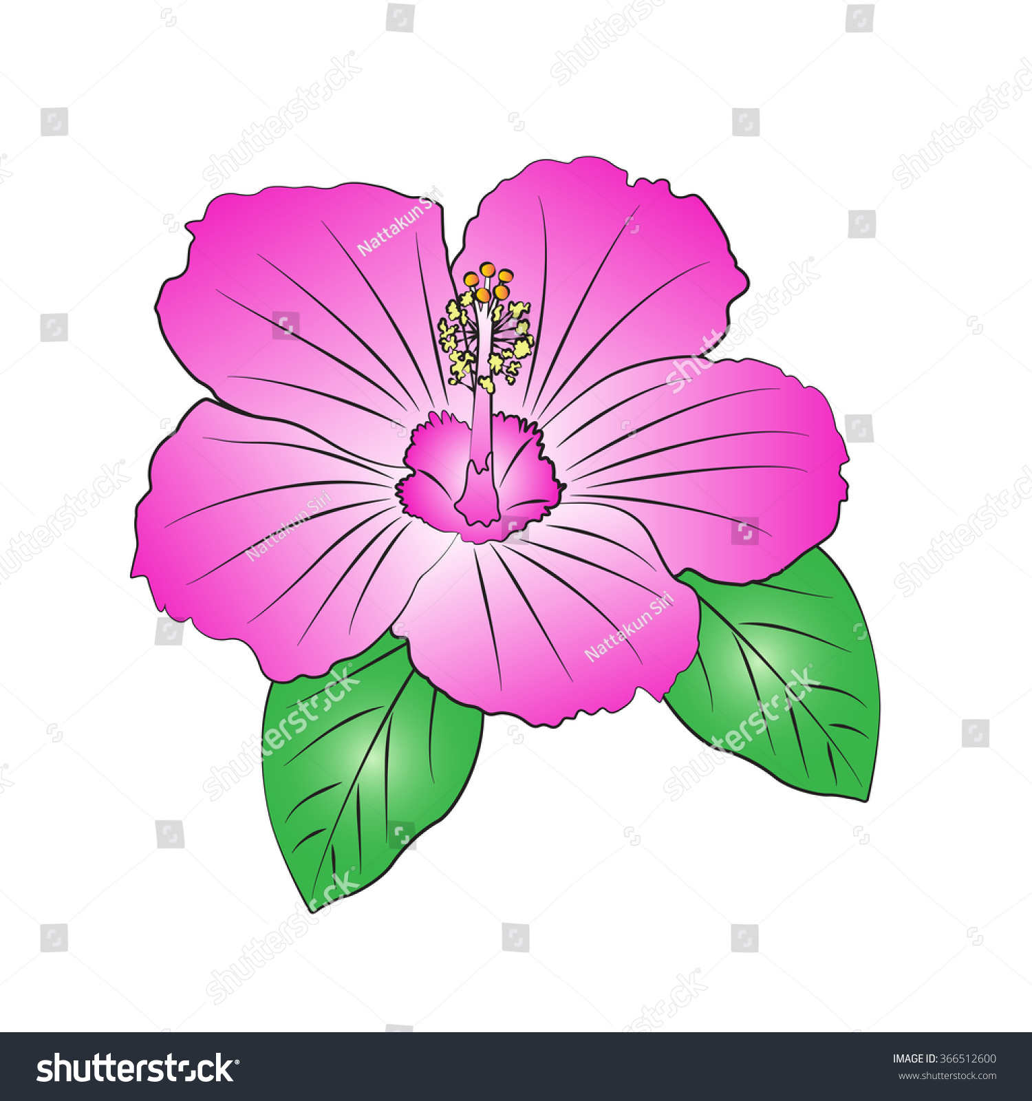 Vector Cartoon Hibiscus On White Background Stock Vector Royalty