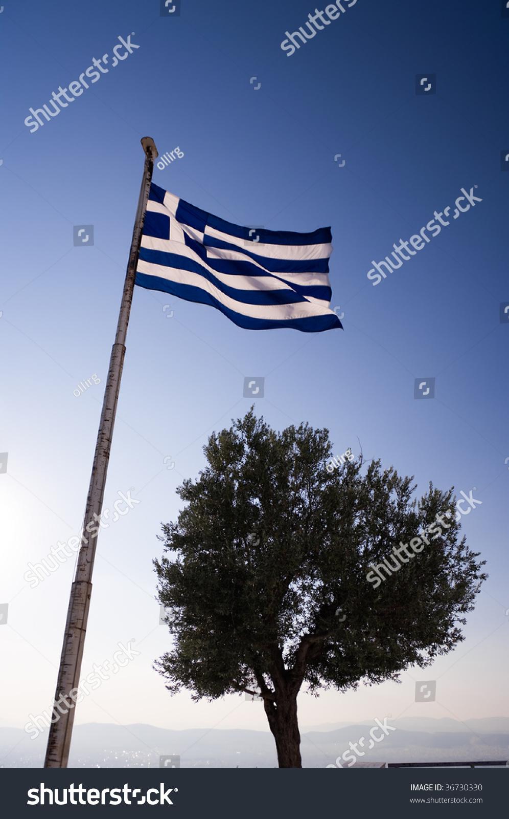 Greek flag olive tree gift female stock photo 36730330 shutterstock the greek flag and the olive tree gift of female god athena and symbol of buycottarizona Choice Image