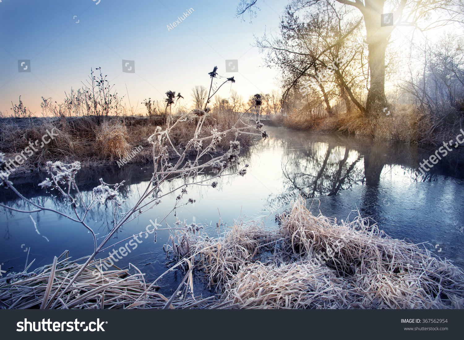 Winter river branches frost dawn stock photo 367562954 shutterstock buycottarizona Images