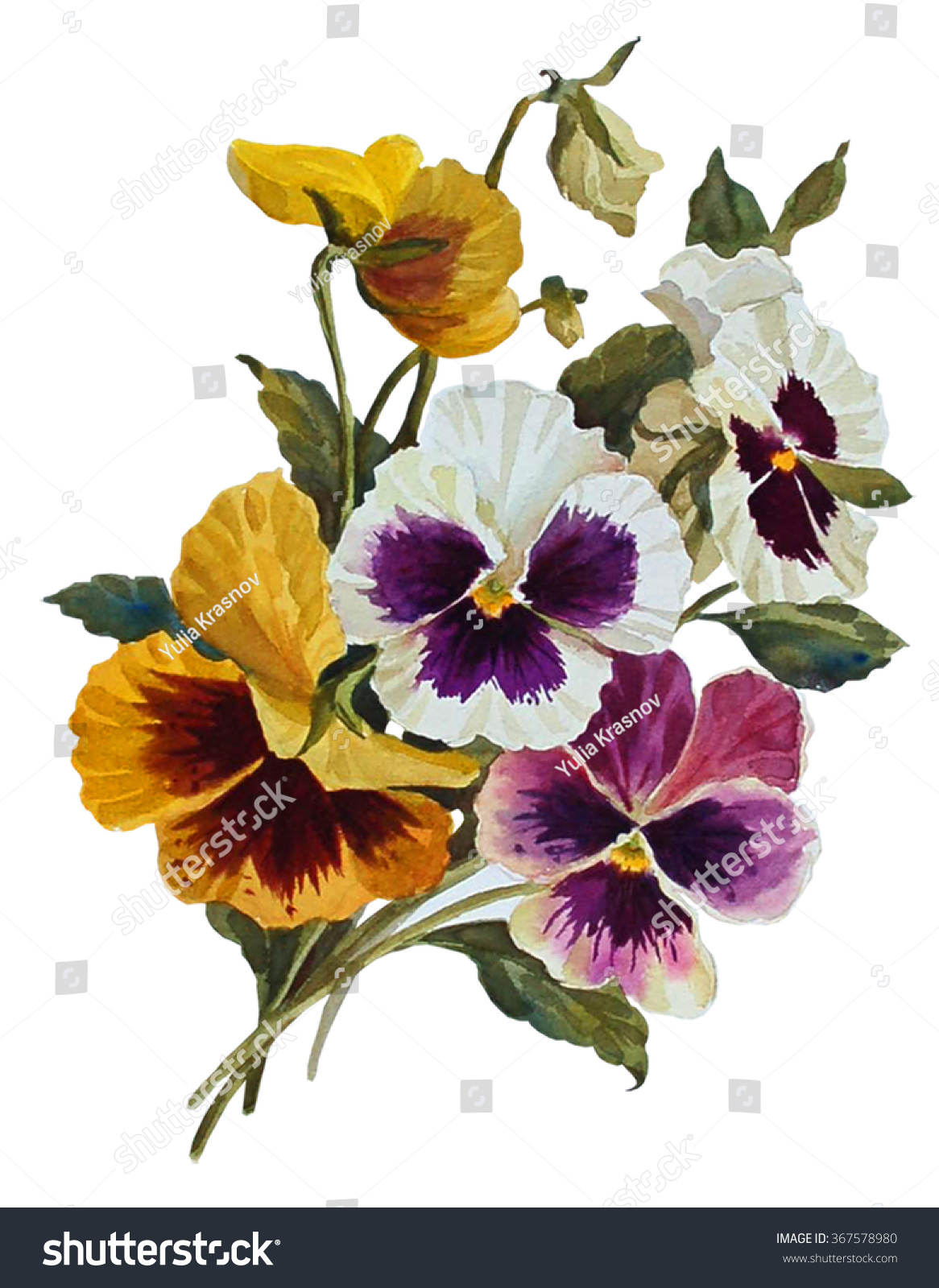 Pansies Flowers Isolated On White Background Stock Illustration