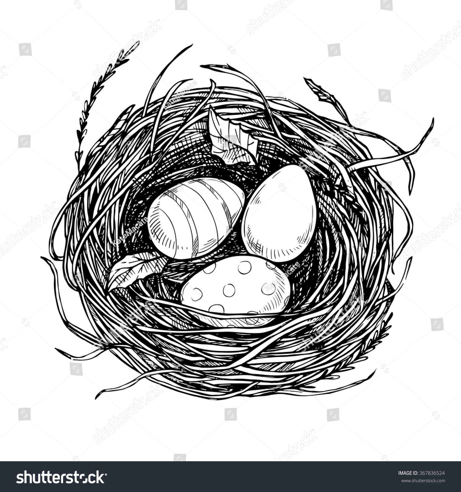 Line Drawing Nest : Hand drawn vector illustration nest easter stock