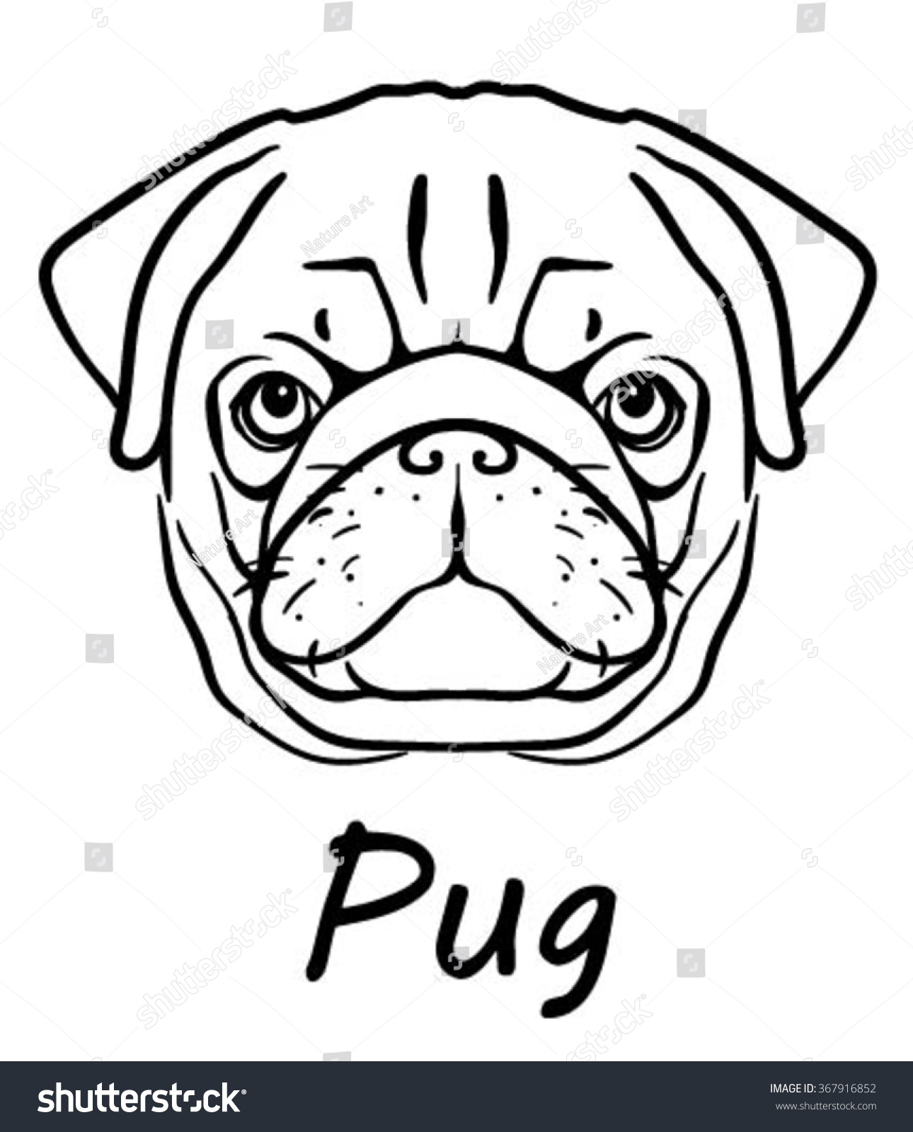 Pug Face Line Drawing : Vector image pug dog face on stock