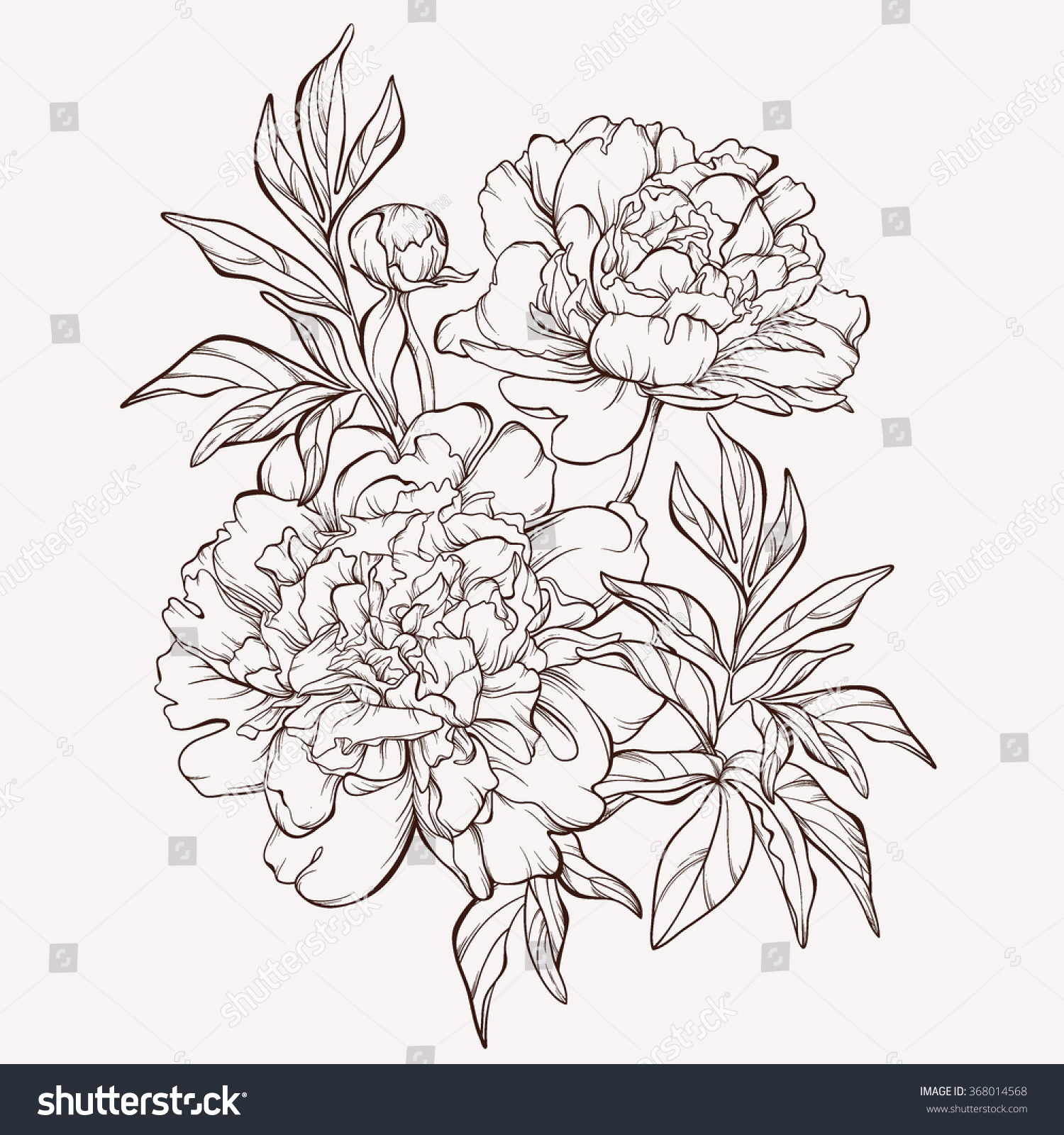 Peony flower isolated on white stock vector 368014568 shutterstock - Vector Peony Flower Isolated On White Background Element For Design Hand Drawn Contour