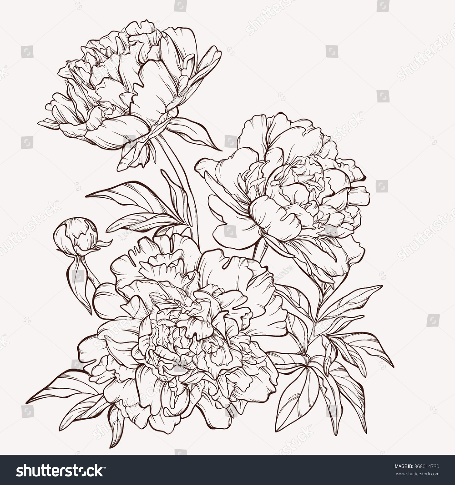 Peony flower isolated on white stock vector 368014568 shutterstock - Blossoming Peony Flowers On White Vector Illustration Perfect For Background Greeting Cards And Invitations