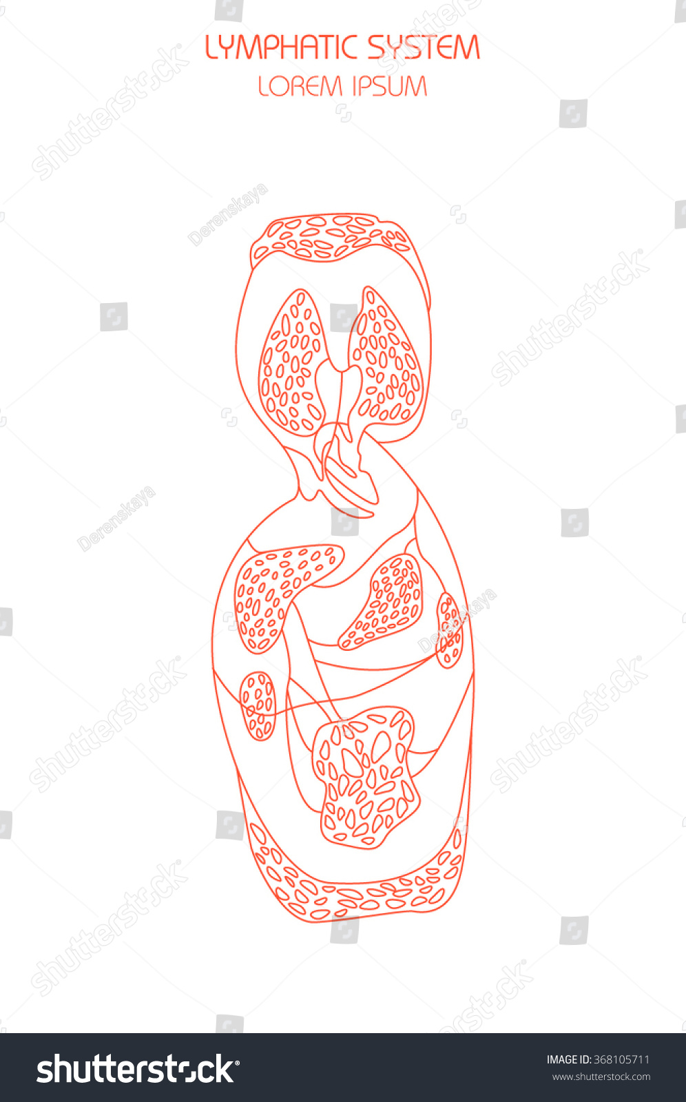 Thin Line Illustration Human Lymphatic System Stock Vector Royalty