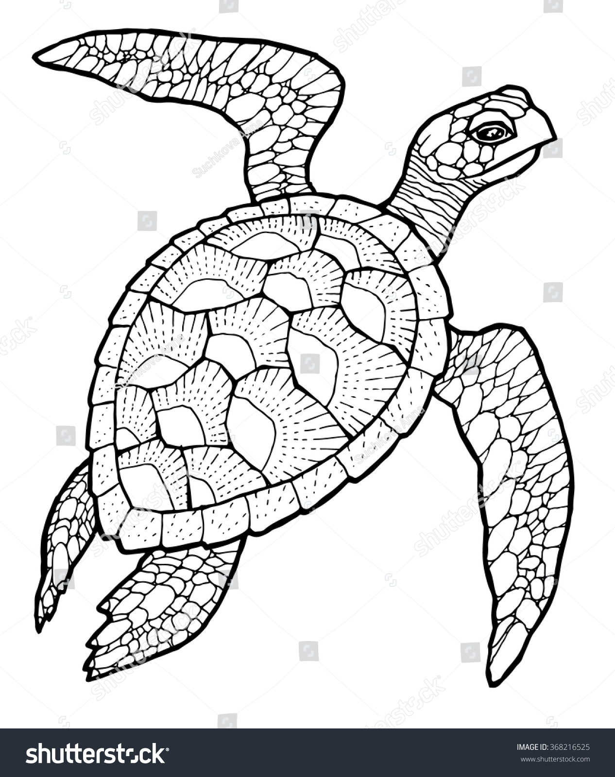Uncategorized Drawing Of Sea Turtle sea turtle vector stylized drawing stock 368216525 drawing