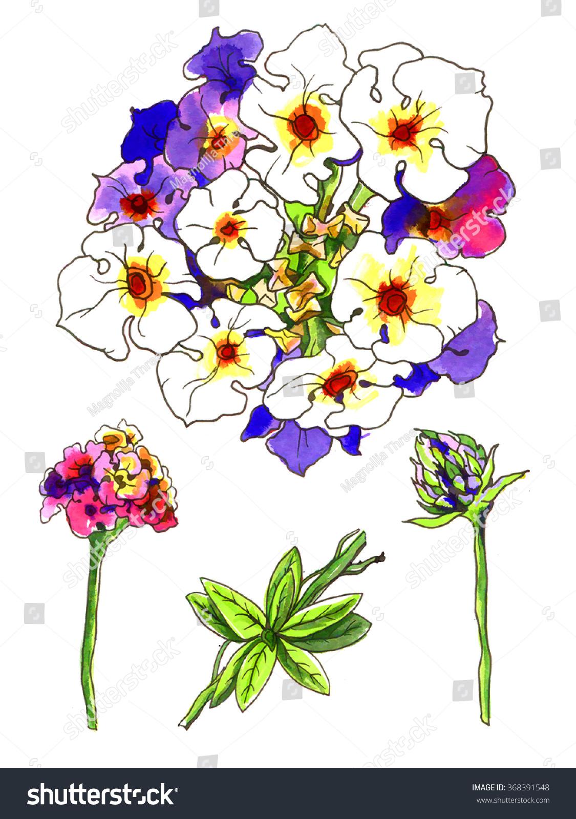 Pink Purple Lantana Camara Tropical Flower Stock Illustration