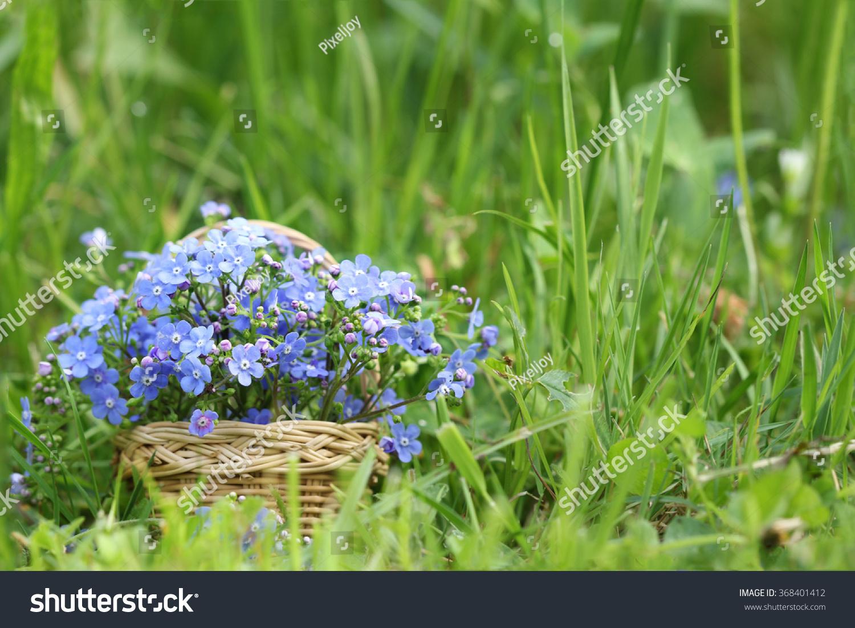 Basket Wild Spring Flowers Forgetmenot Stock Photo 368401412