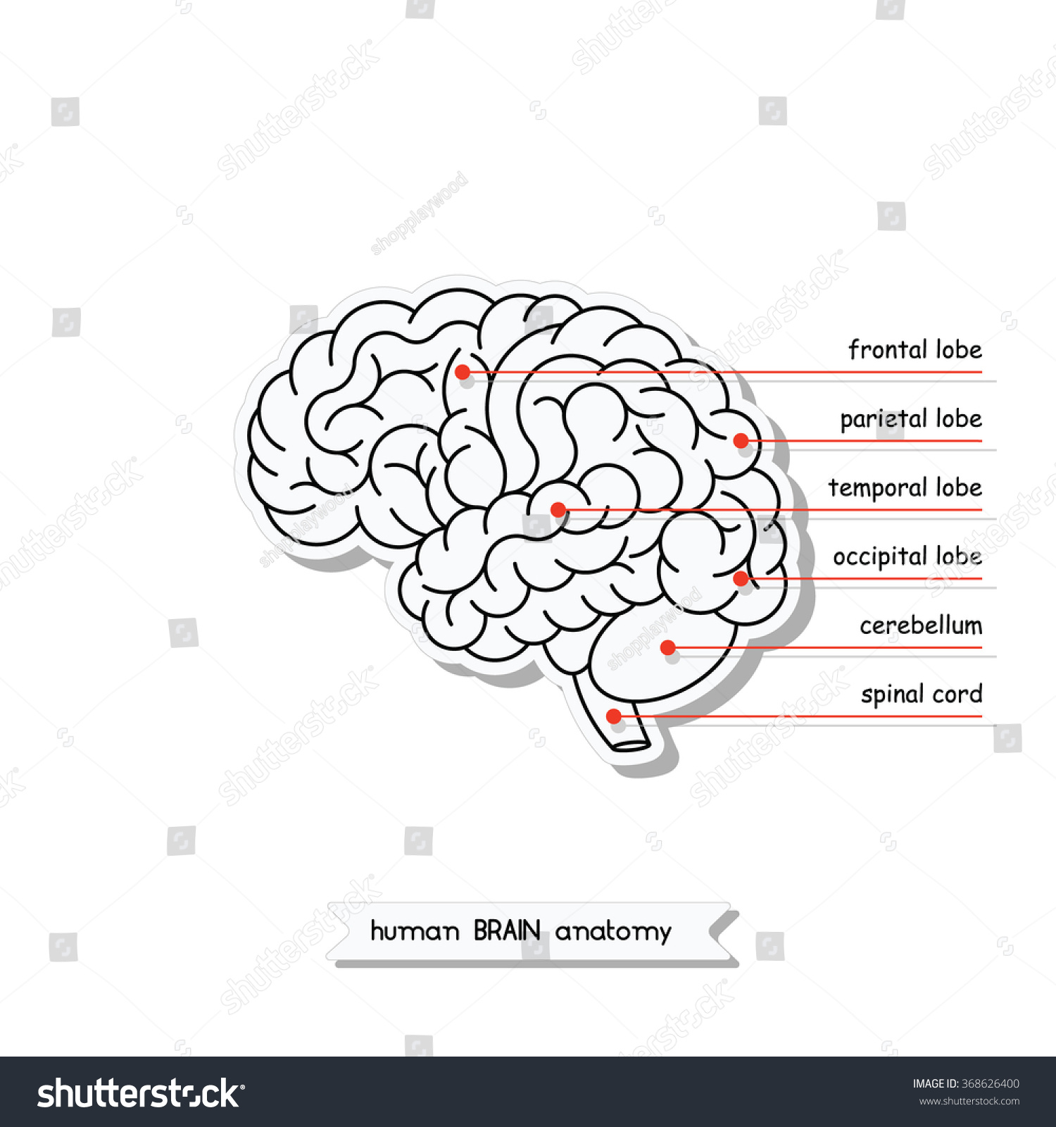 Vector Human Brain Views Isolated Brain Stock Vector (Royalty Free ...
