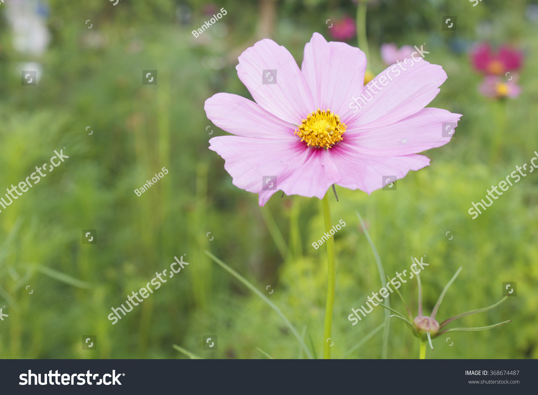 Beautiful Single Pink Flower Ez Canvas
