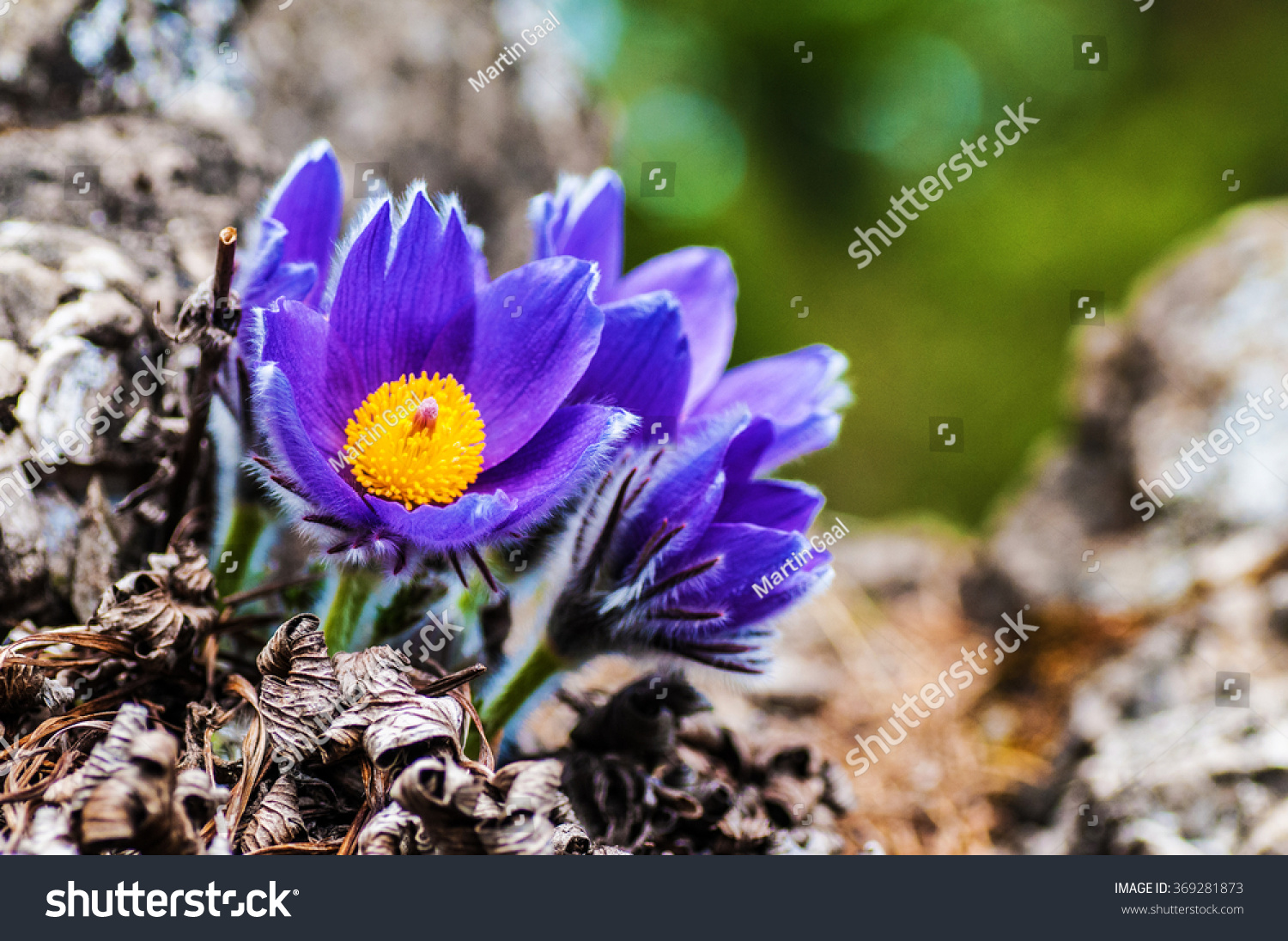 Purple Flower Nature Spring Flowers Blooming Stock Photo Edit Now