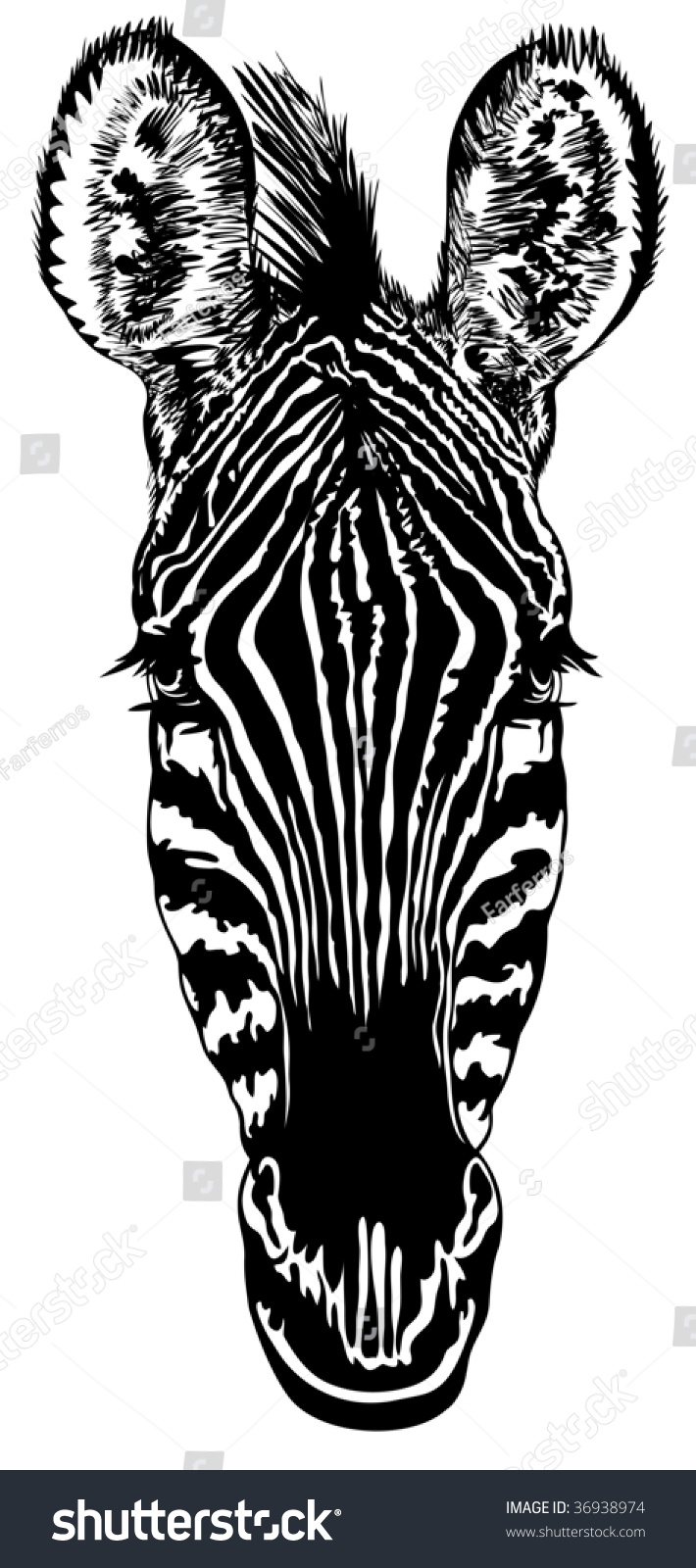 Blackandwhite Striped Drawing Of A Head Of A Zebra Blackandwhite Striped  Drawing Head Zebra Stock Vector
