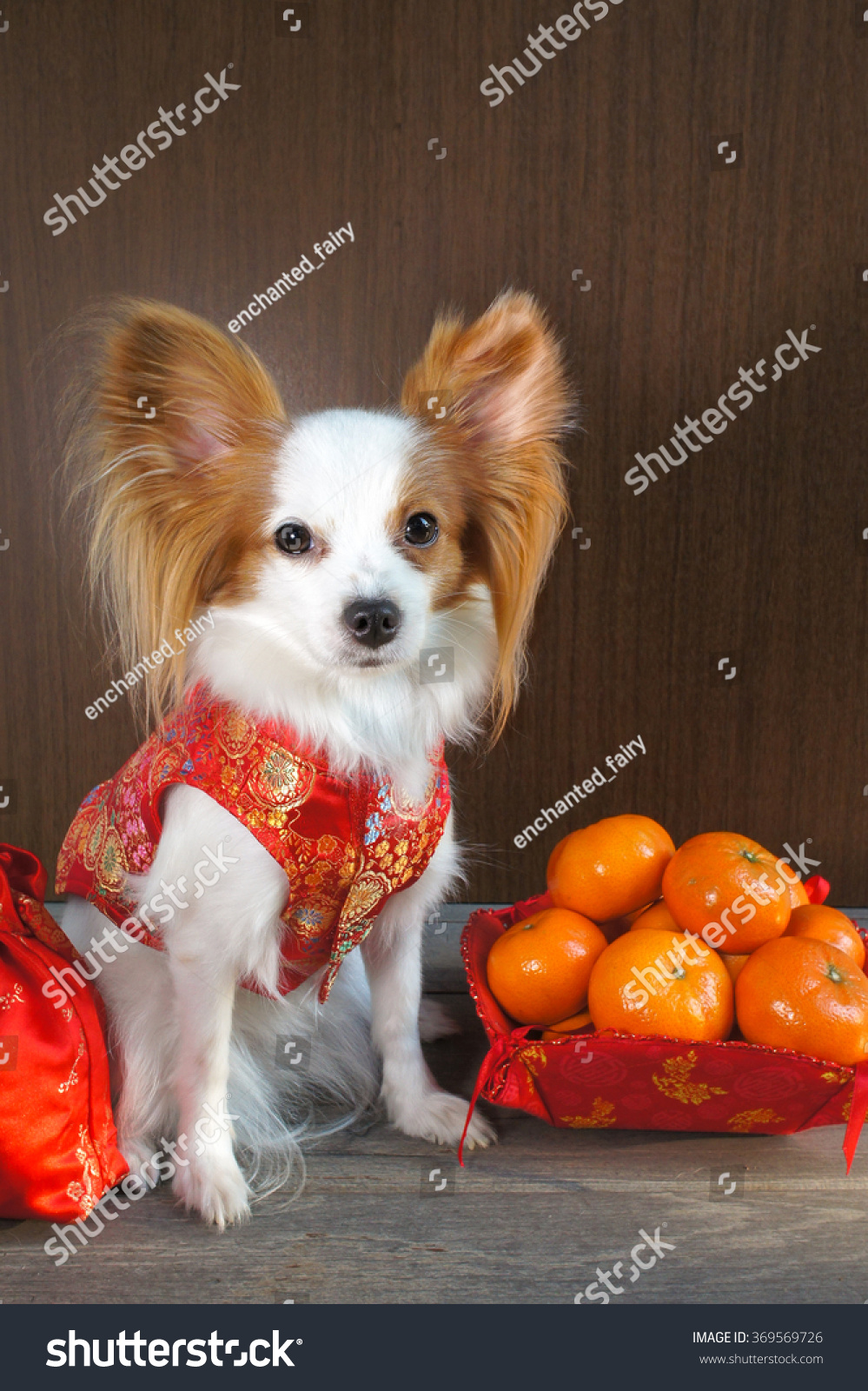 Simple Papillon Canine Adorable Dog - stock-photo-adorable-dog-in-chinese-traditional-red-dress-qipao-made-from-silk-isolated-on-wooden-369569726  Photograph_358568  .jpg