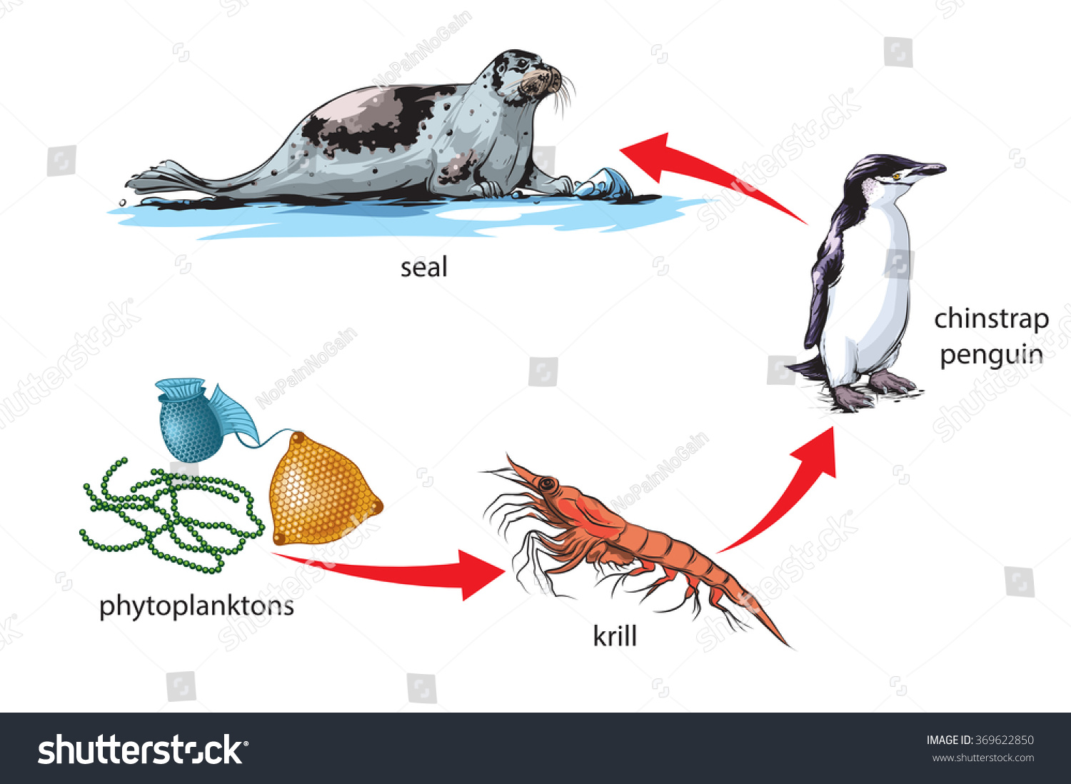 emperor penguin food chain - photo #20