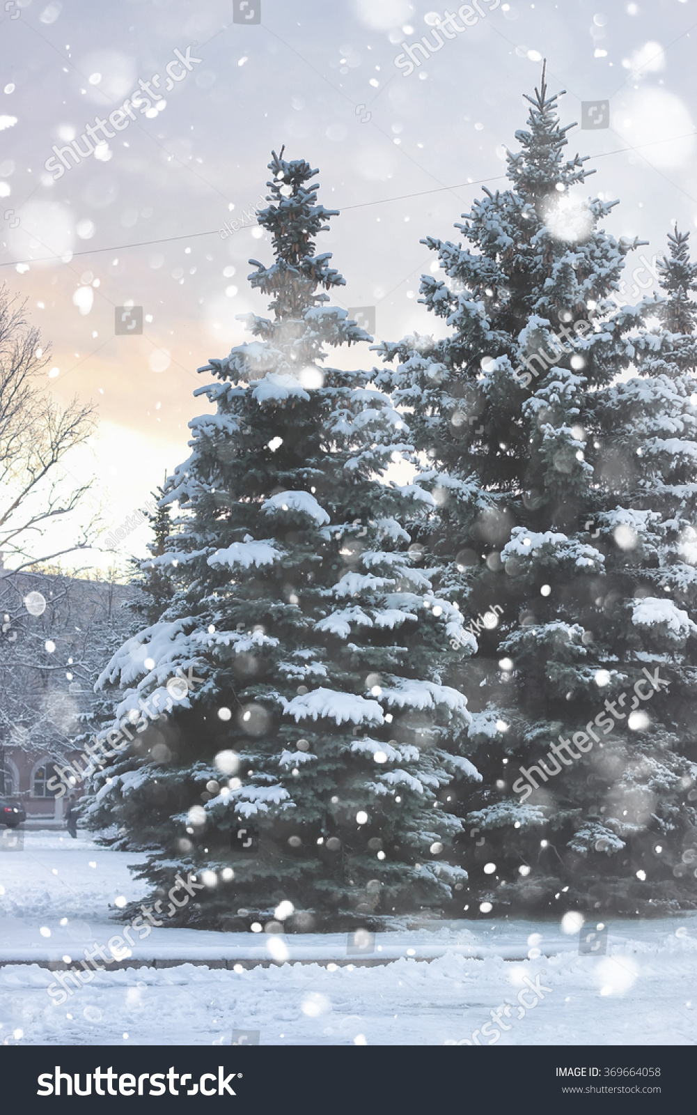winter fir tree snow