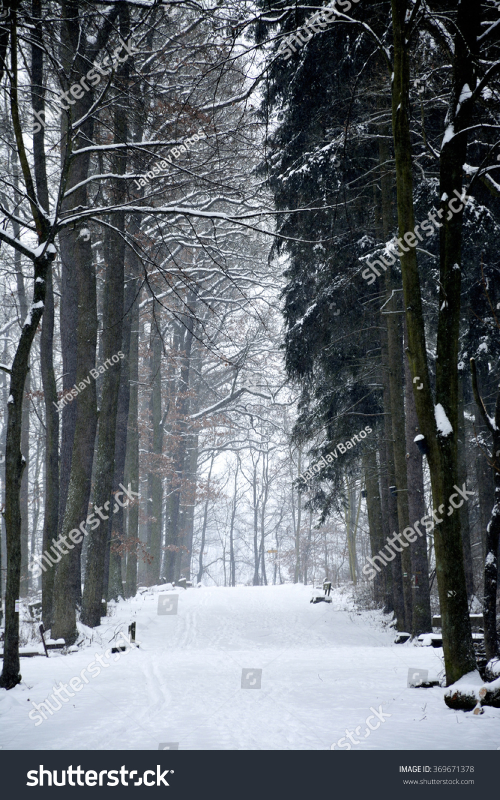 snow winter white trees black forest scenery blackandwhite ... |Winter Forest Black And White