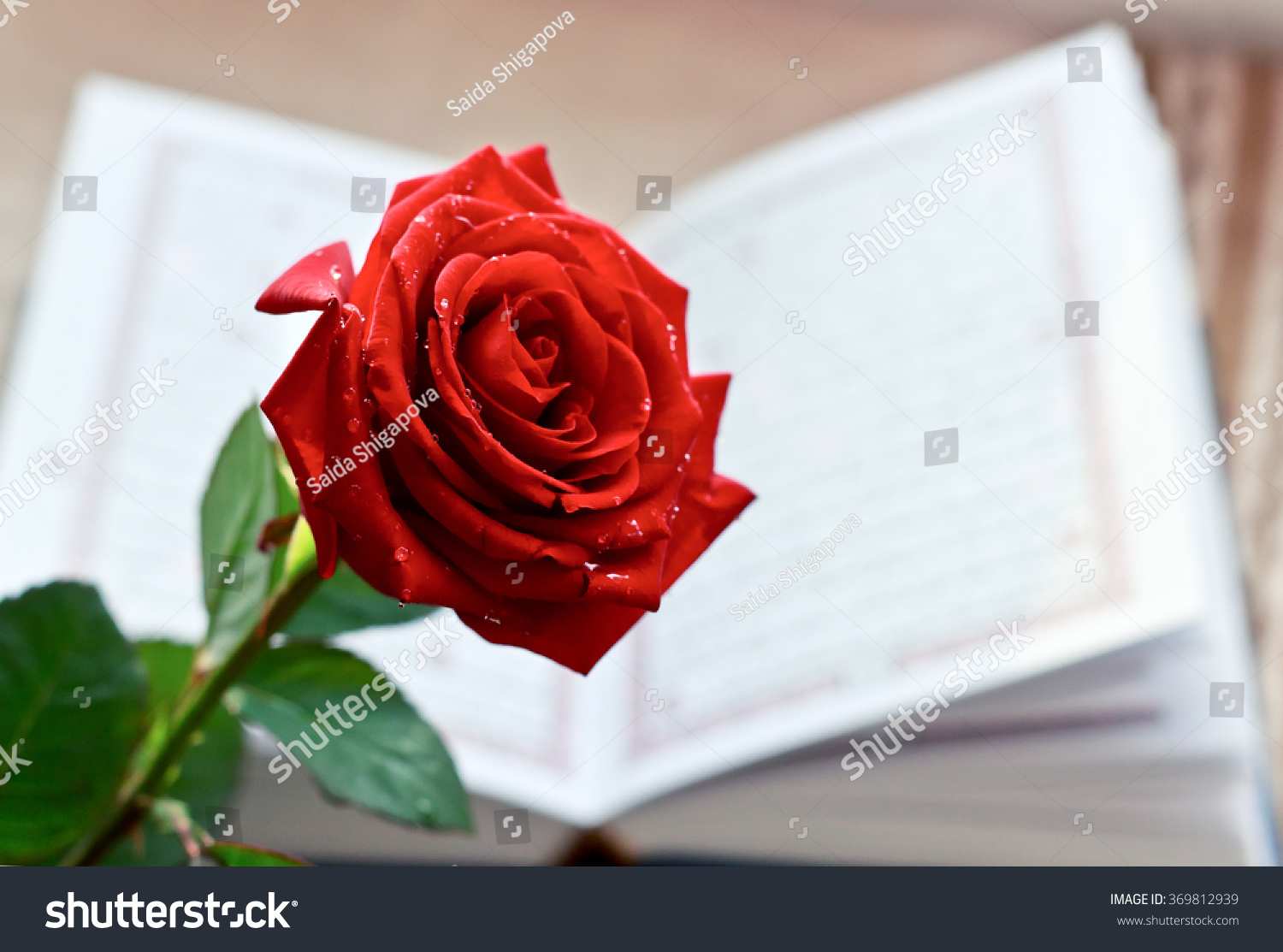 Rose Quran Holy Book Islam Stock Photo Edit Now 369812939