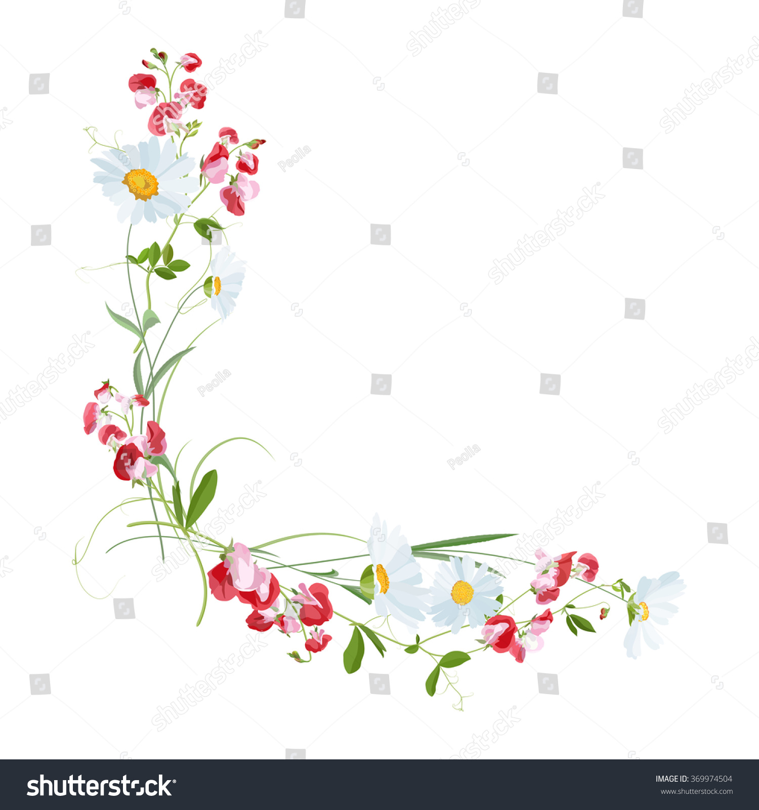 Bouquet Flowers Daisy Sweet Pea Stock Vector Royalty Free