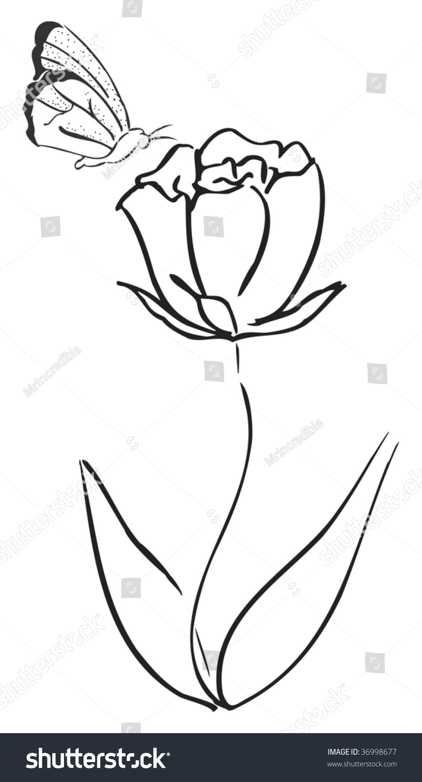 Vector Drawing Lines App : Line drawing butterfly flower stock vector