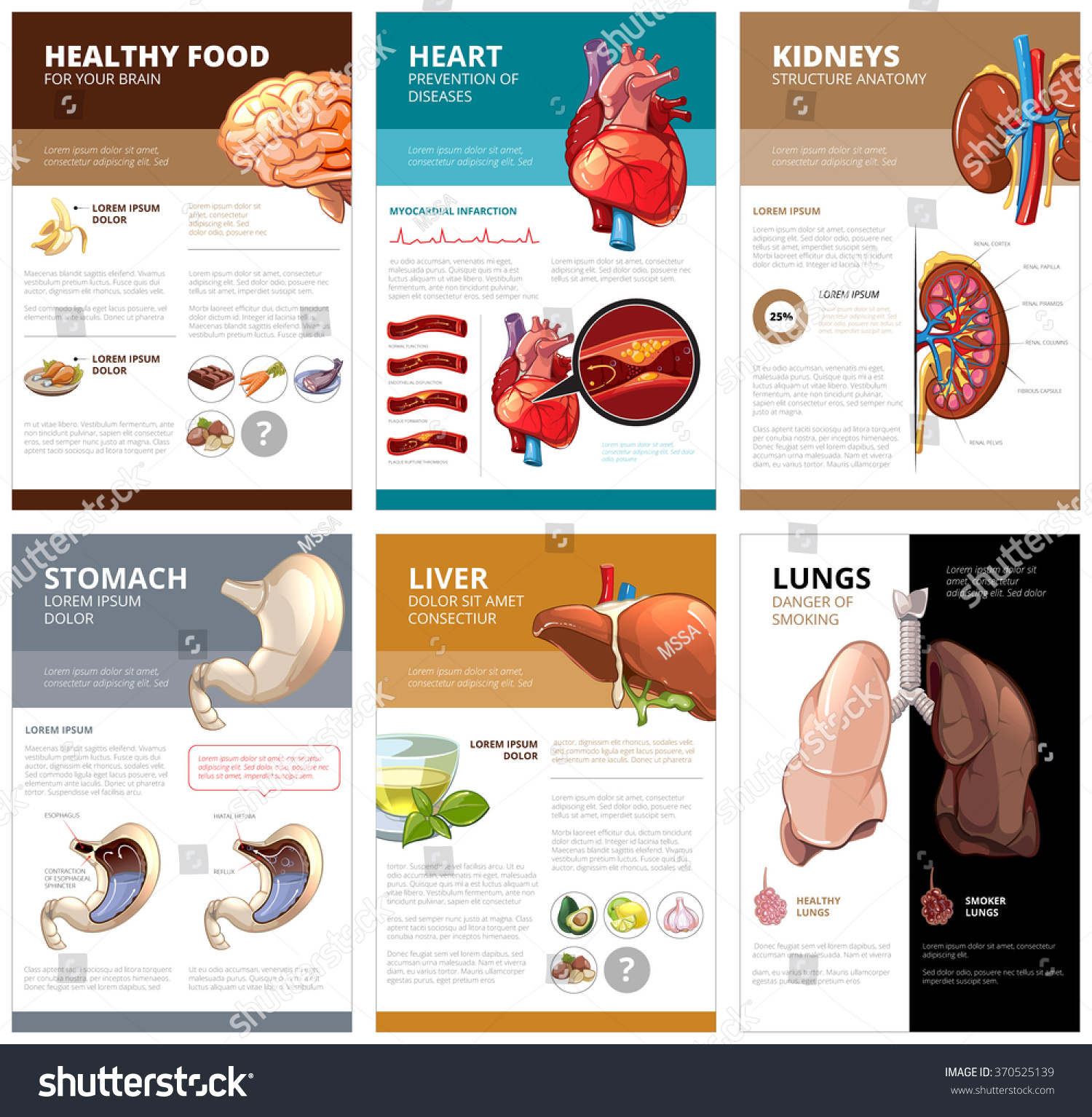 Liver and health
