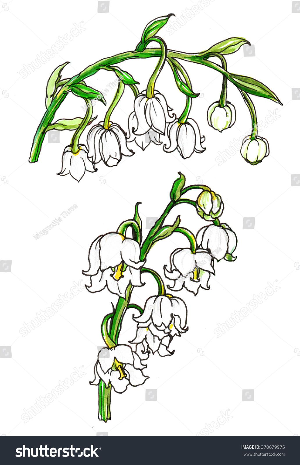 White lily valley spring flowers wedding stock illustration white lily of the valley spring flowers for wedding printing products cards invitations izmirmasajfo