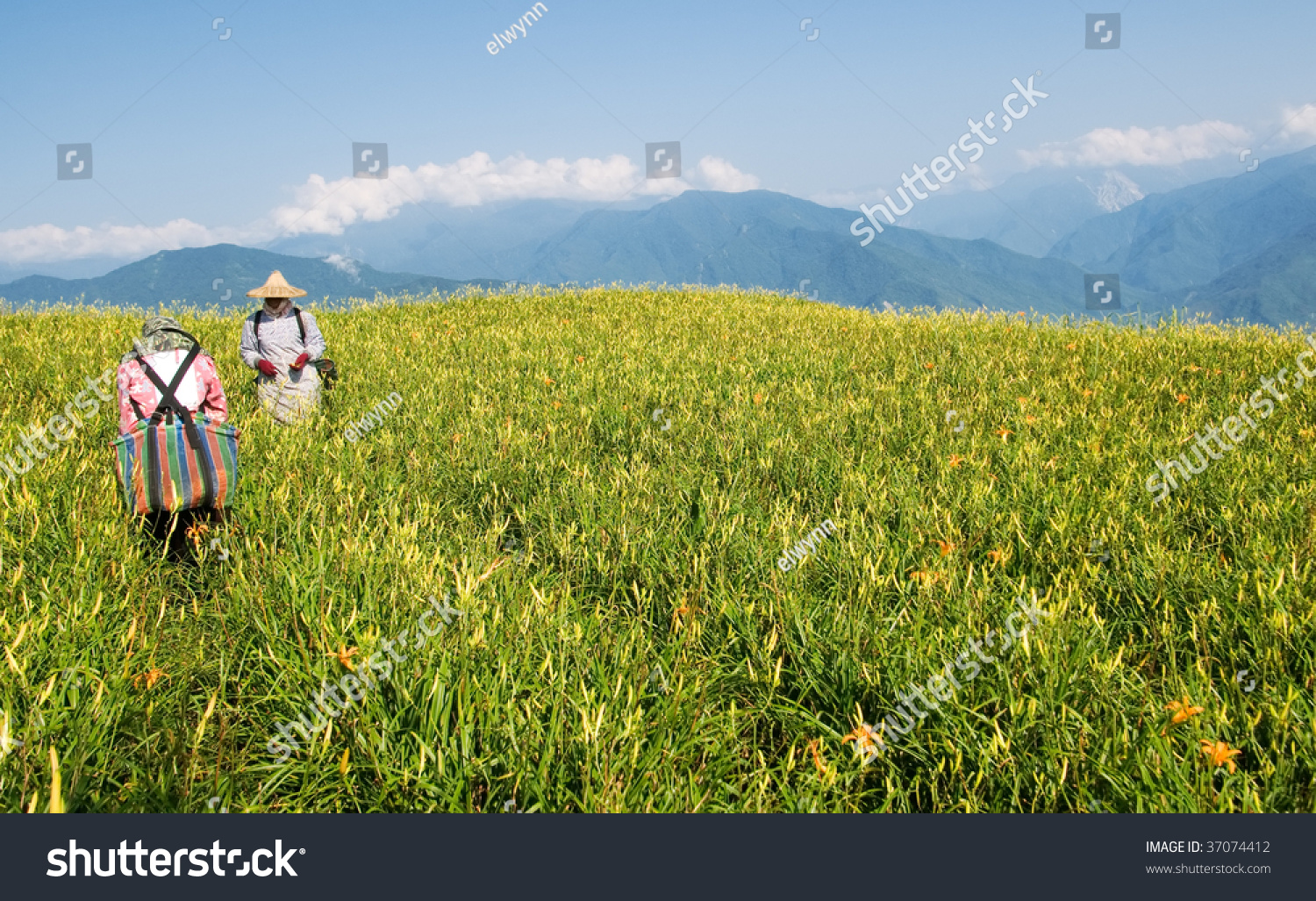 tiger lily farmer working in the farm stock photo. Black Bedroom Furniture Sets. Home Design Ideas