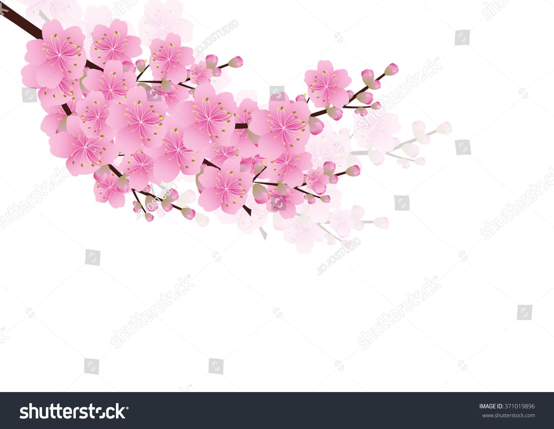 Pink Flowers Spring Background Sakura Cherry Stock Vector Royalty